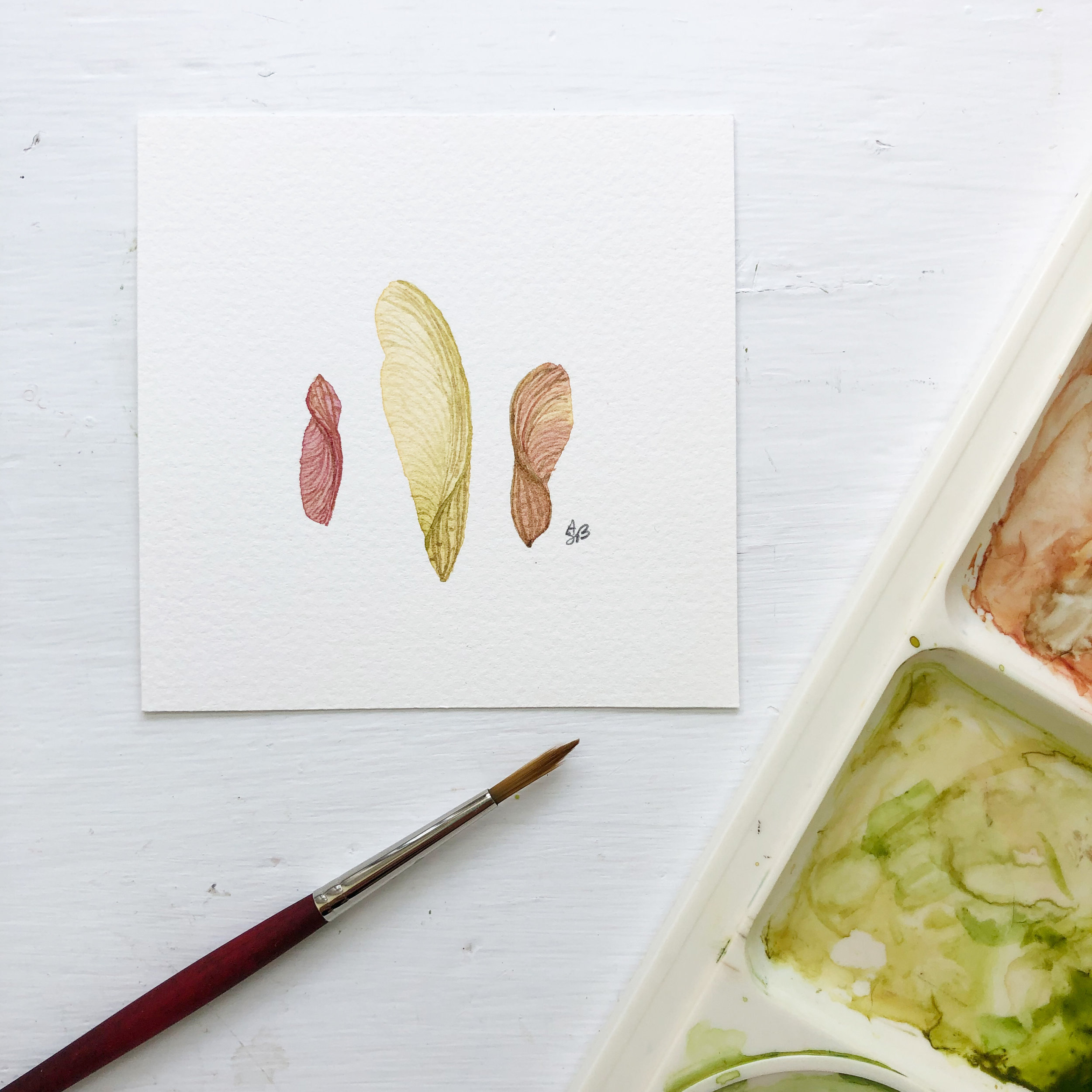 Watercolor Illustration of Three Little Maple Seeds by Anne Butera
