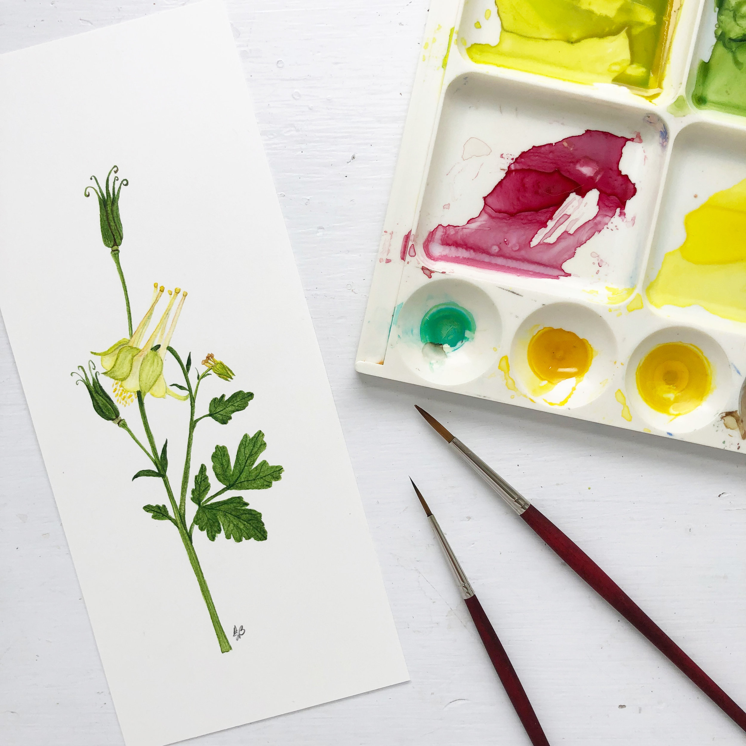 I Painted a Yellow Columbine Flower In My Studio This Week With Paint I Mixed Outside in My Garden