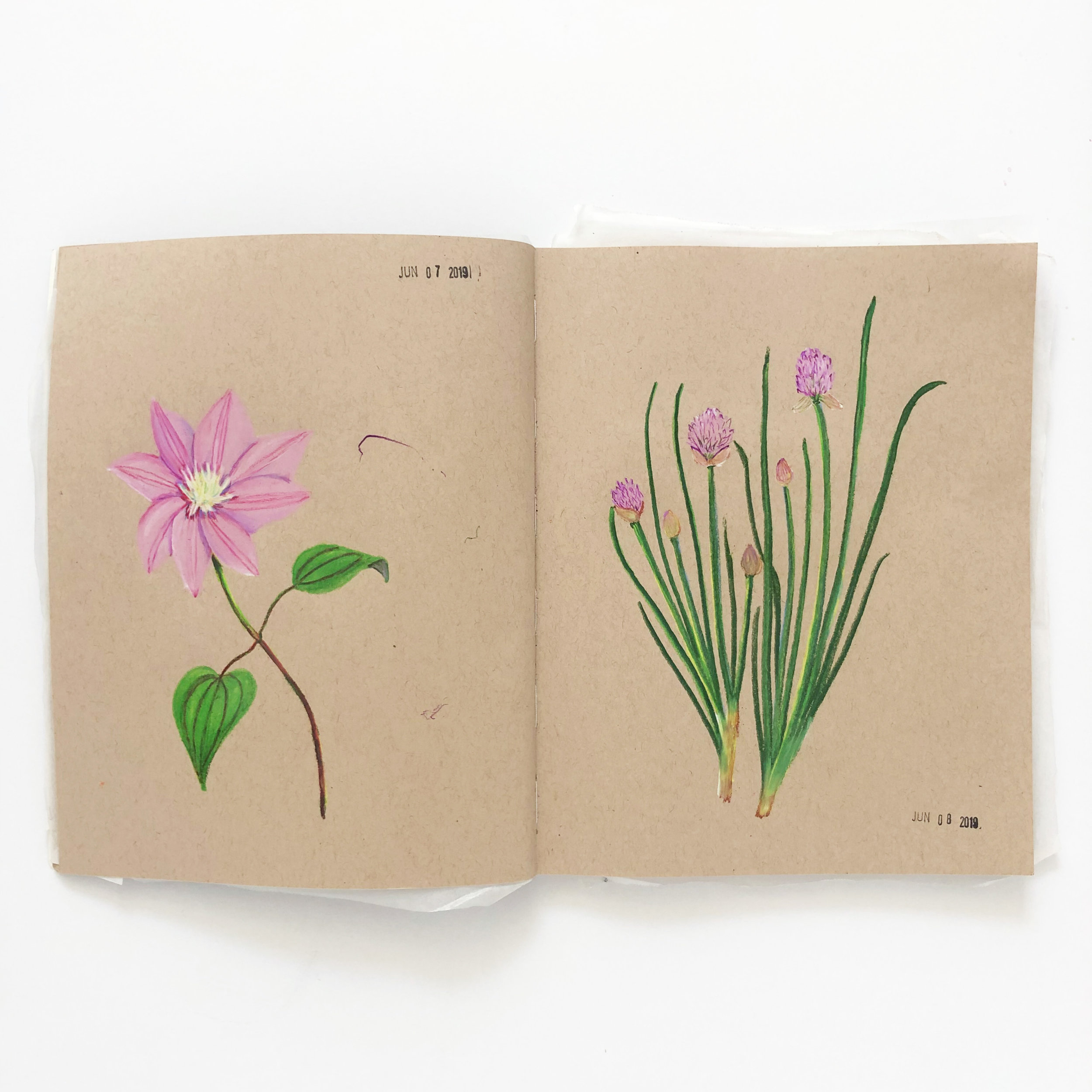 A Peek Inside Anne Butera's Colored Pencil Sketchbook with Sketches of Clematis and Chives