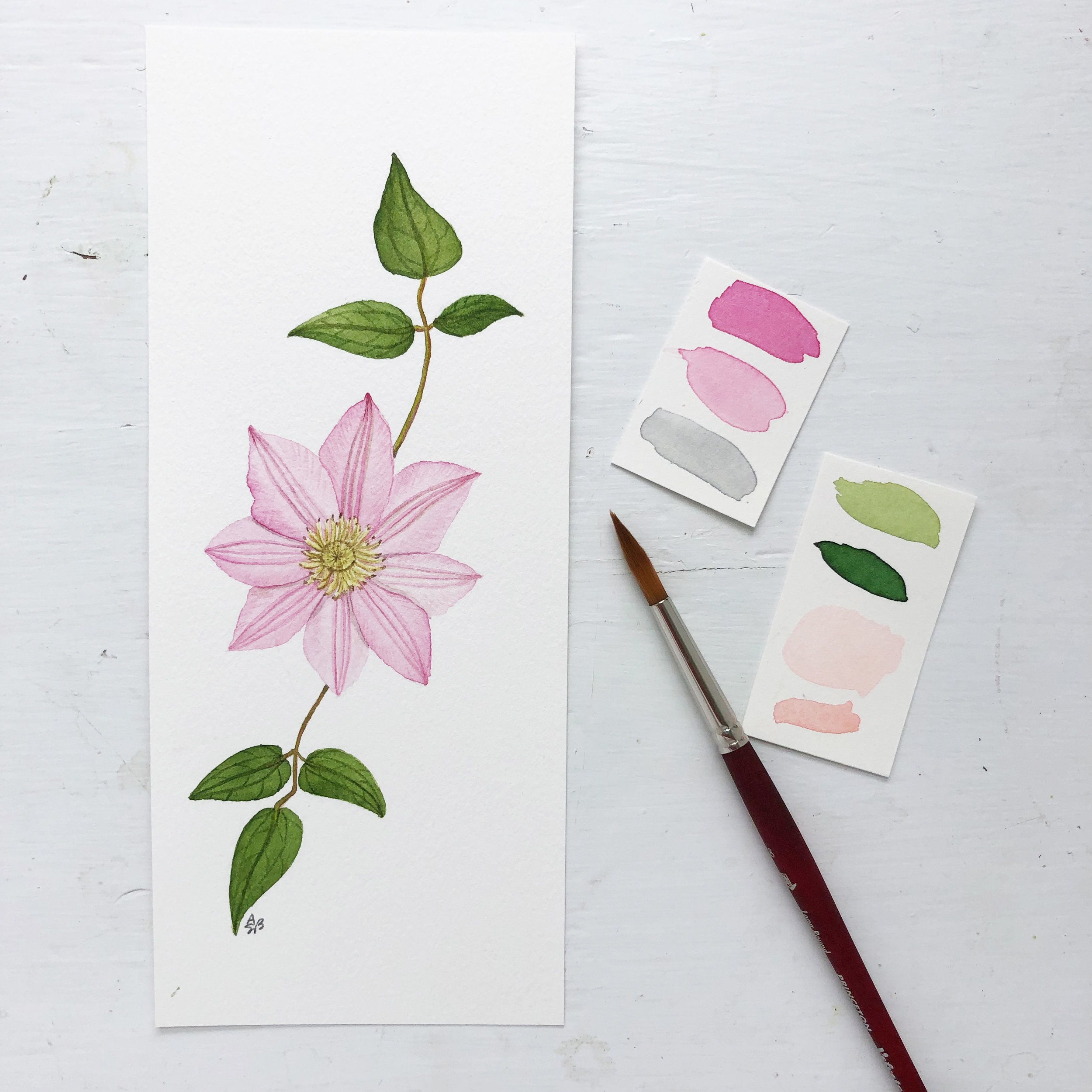 A Botanical Watercolor Illustration of a Clematis Flower Painted by Anne Butera