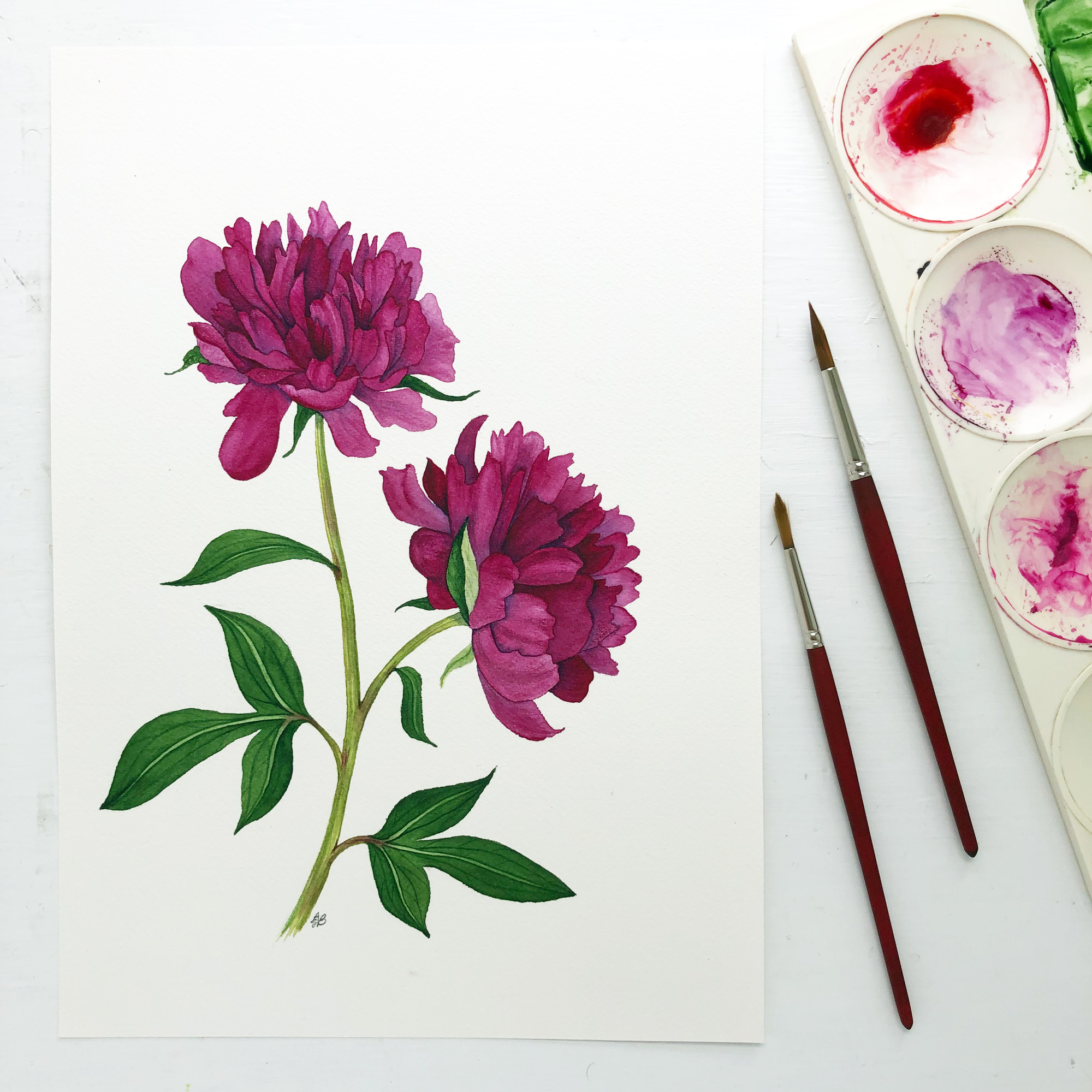 Deep Red Peony Flower Watercolor Painting by Anne Butera