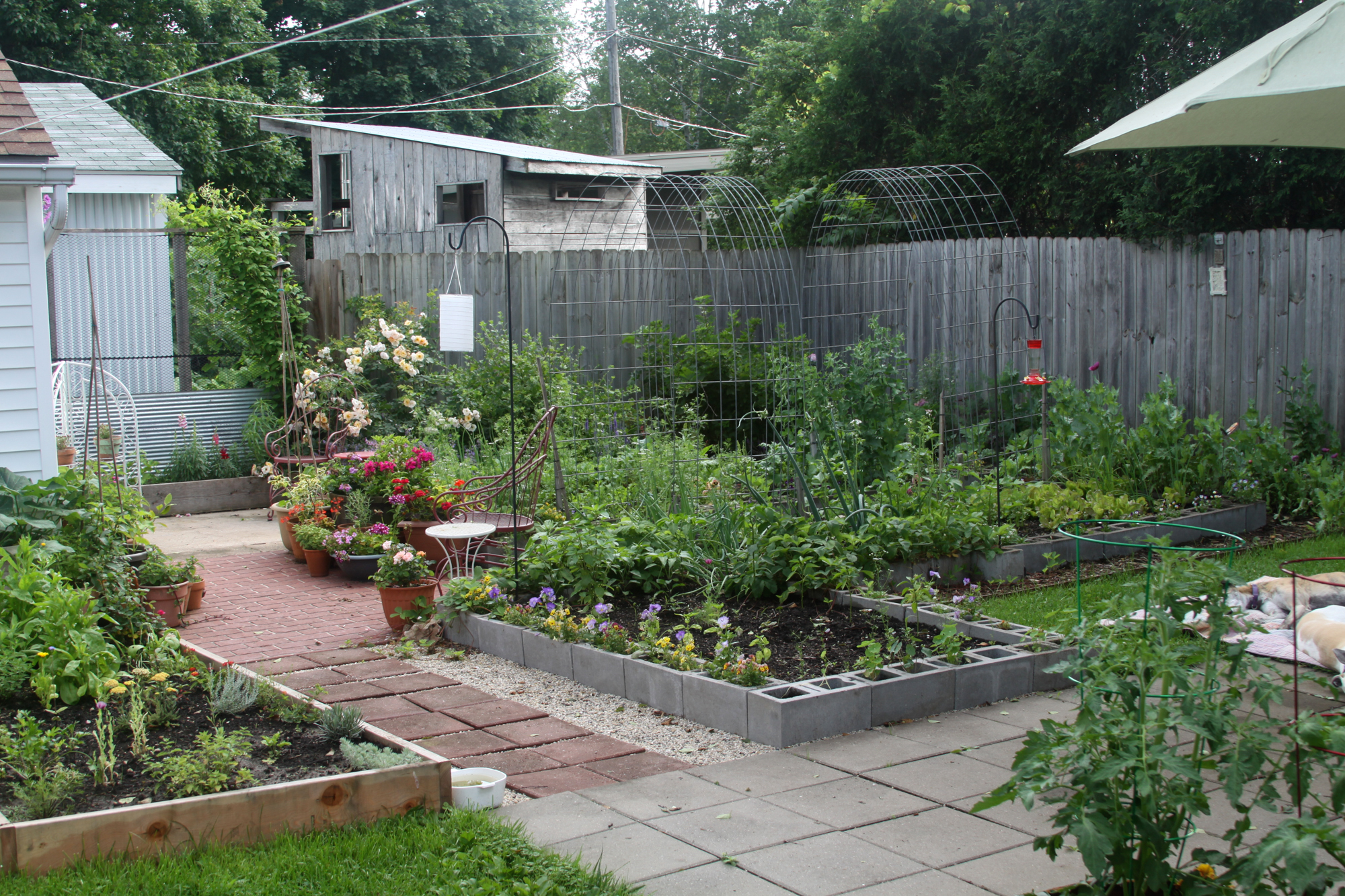 In Anne Butera's backyard more grass disappears every year and is replaced with gardens