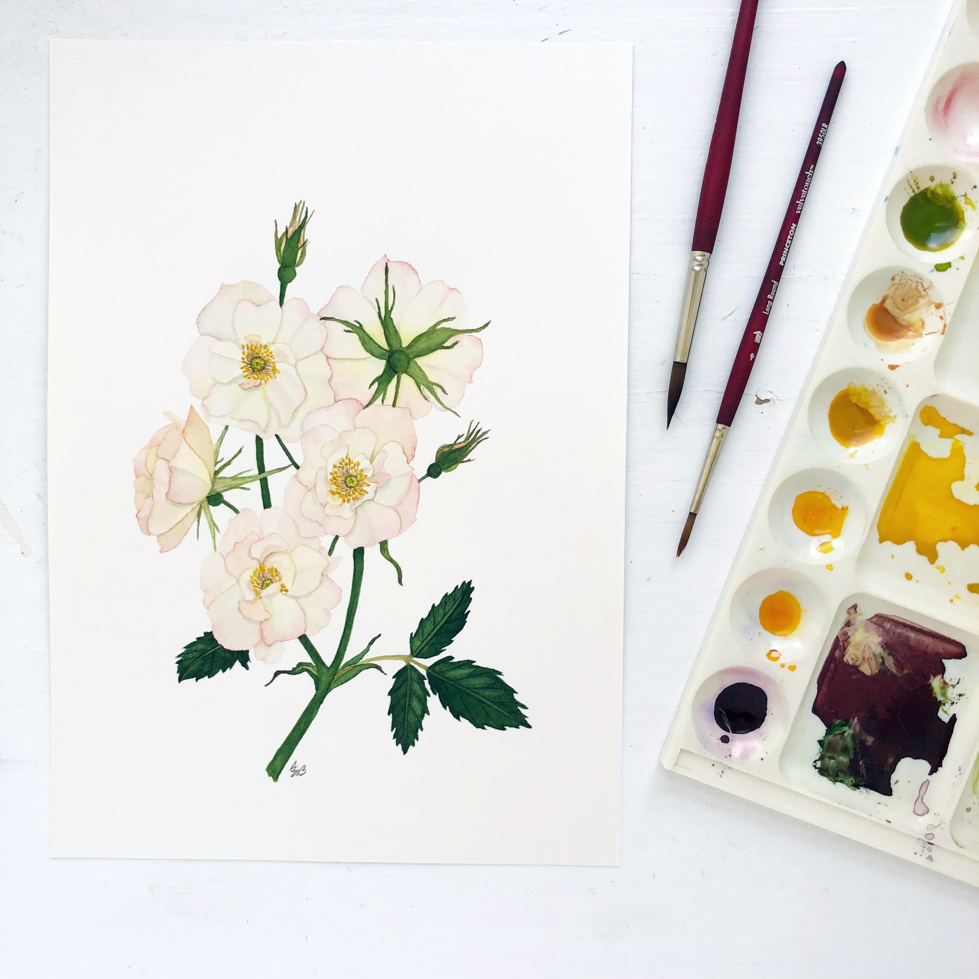 Watercolor Roses Painting by Anne Butera