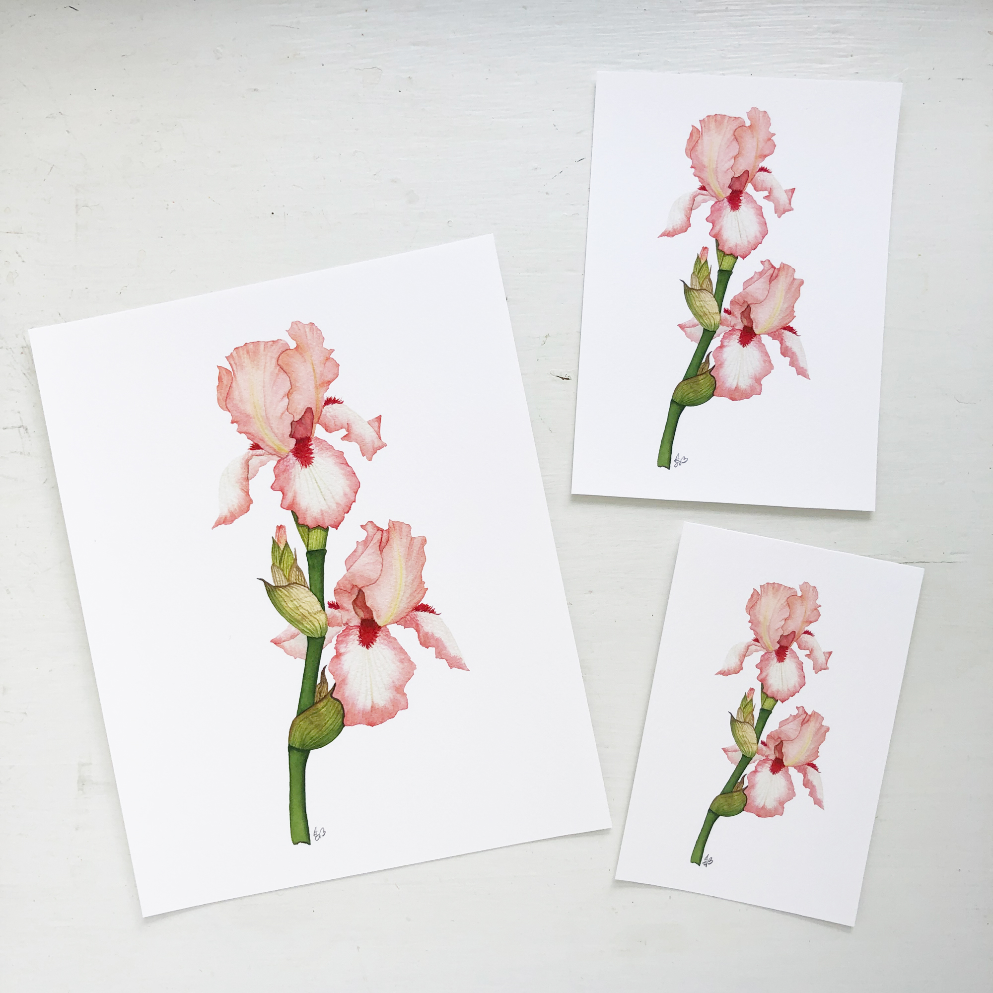 Peach Iris Prints are Available in Anne Butera's Etsy Shop