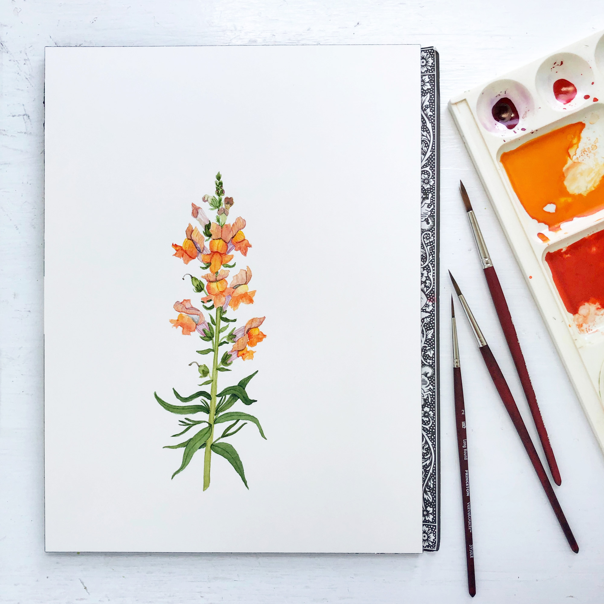 Snapdragon Watercolor Painting by Anne Butera