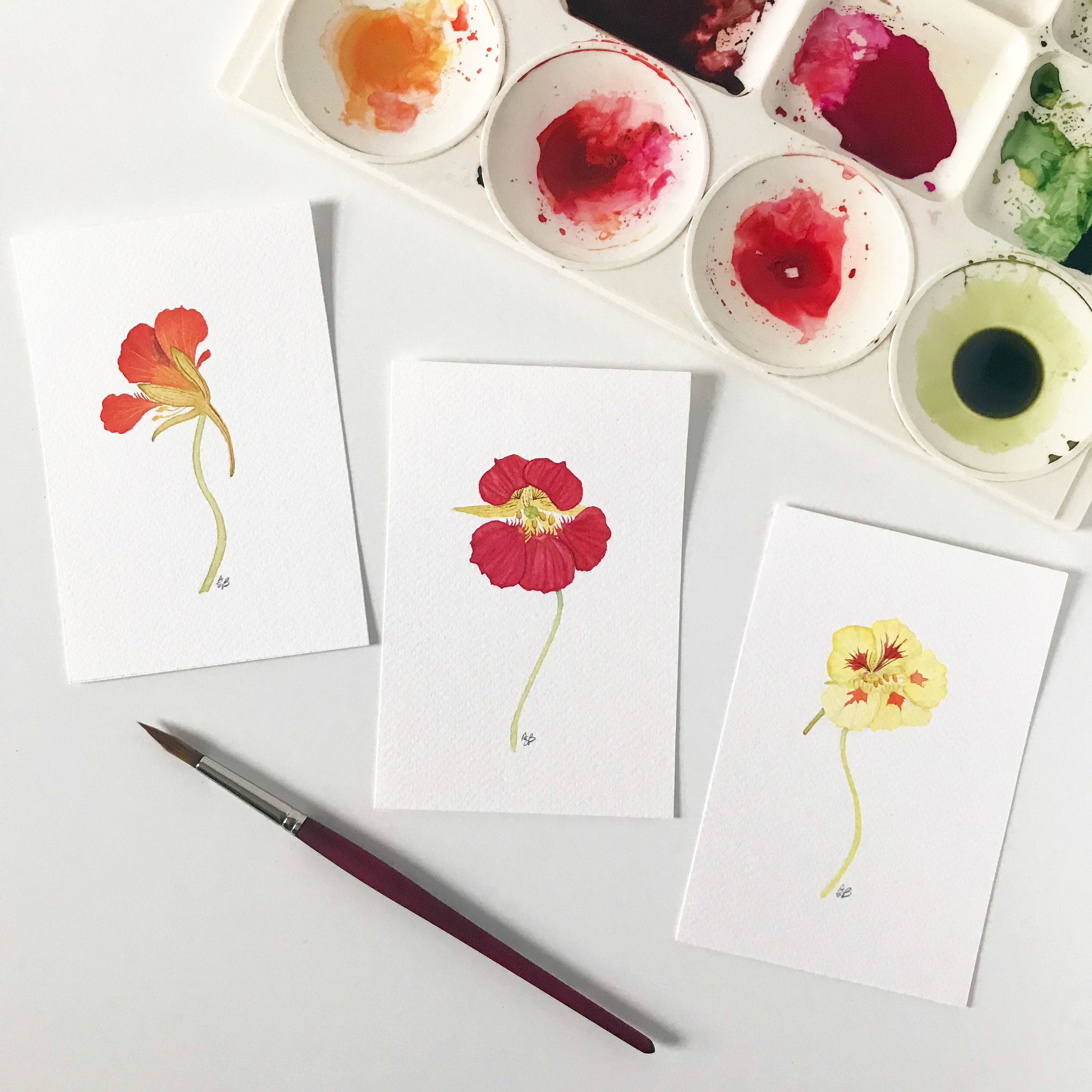 Three Botanical Watercolor Paintings of Nasturtiums by Anne Butera