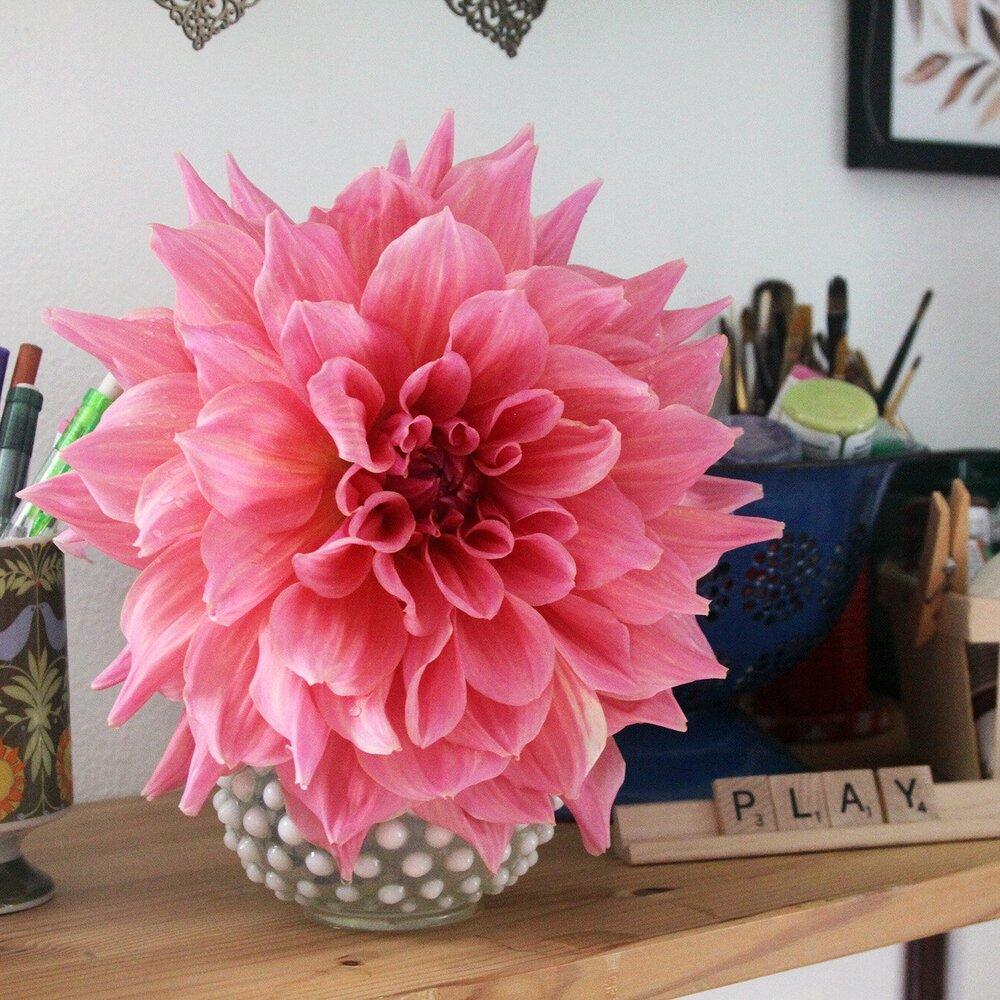 A Single Flower of Otto's Thrill Dahlia Brings Me Joy on a Shelf in My Studio