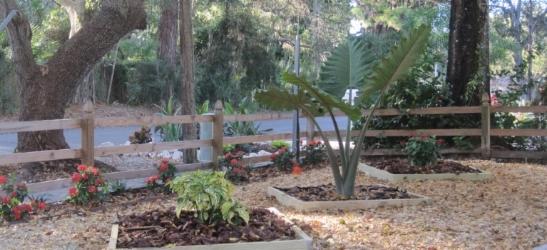 Sarasota Florida Landscaping