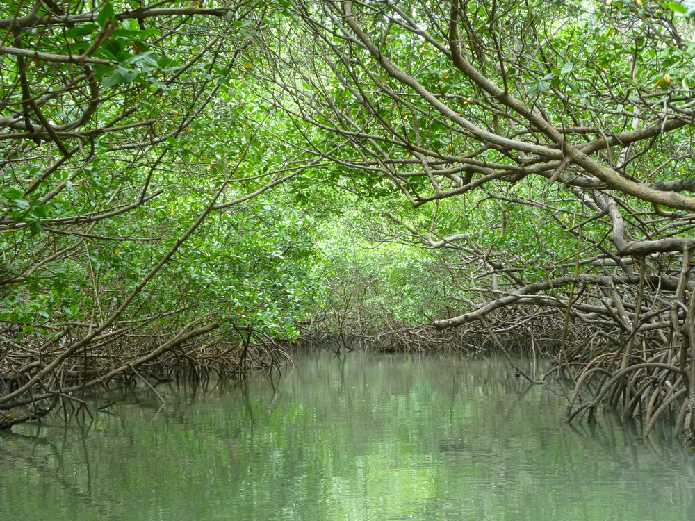 The mangrove forests that surround the island on three sides
