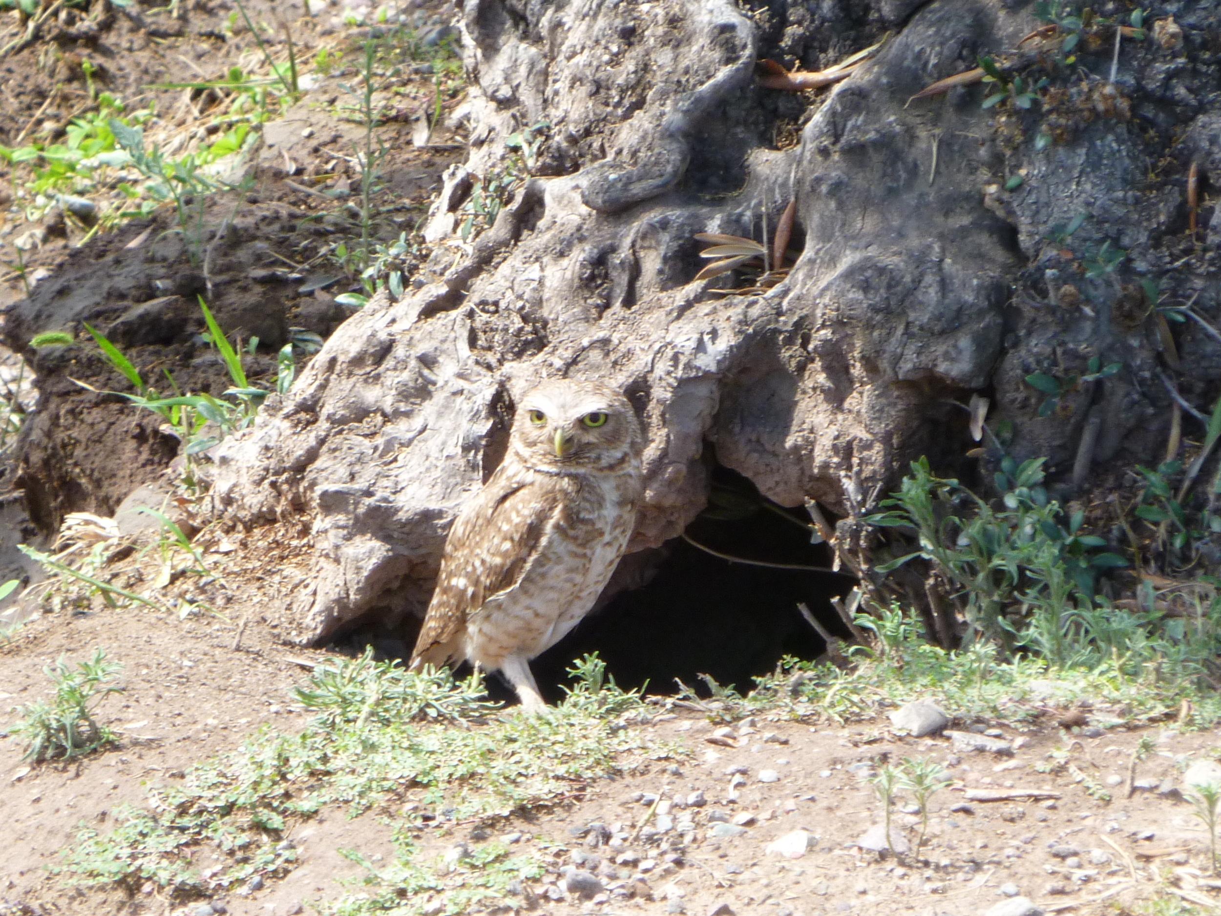 The menacing owl encounter...