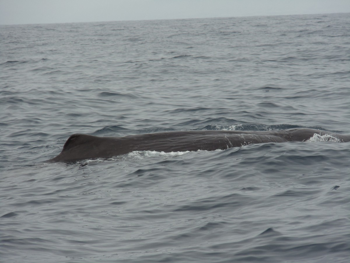 Whale skin and dorsal fin