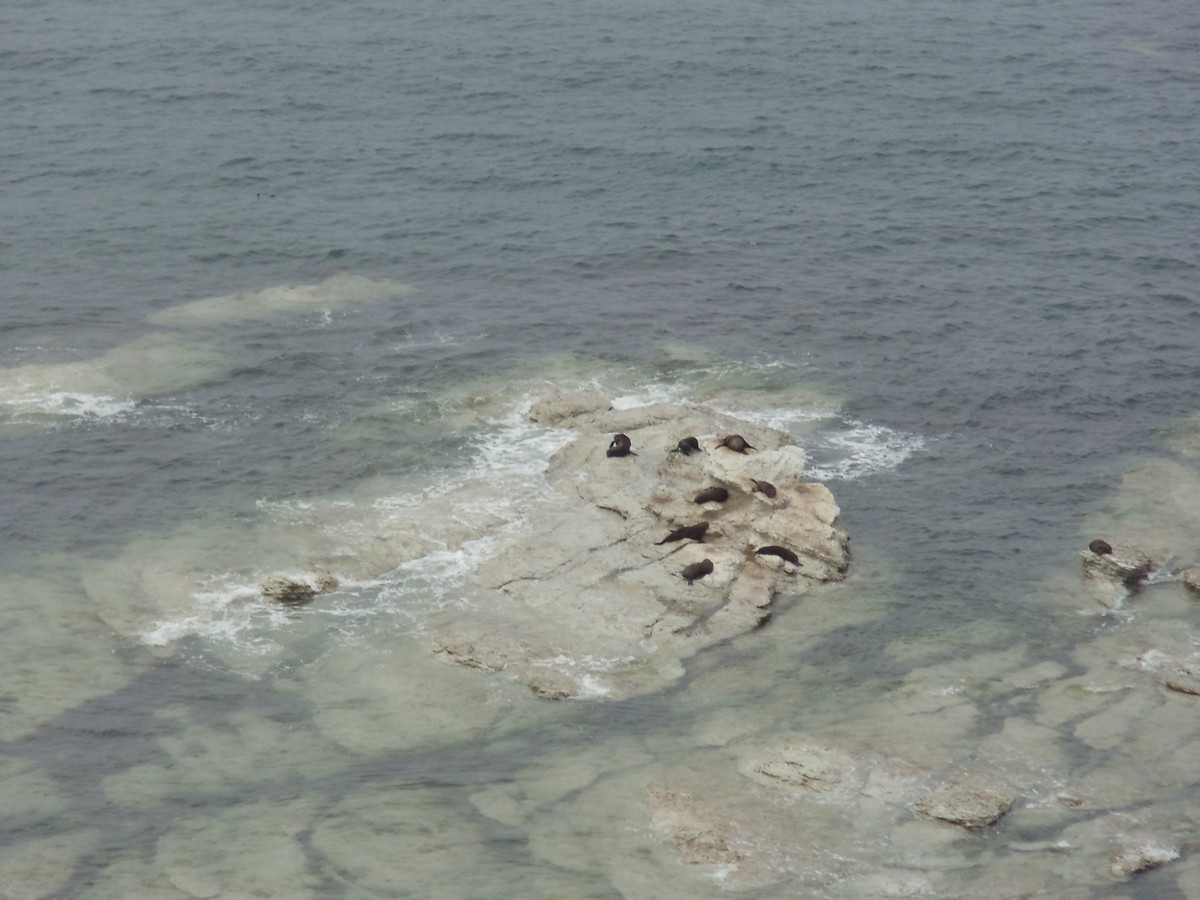 Seals from above