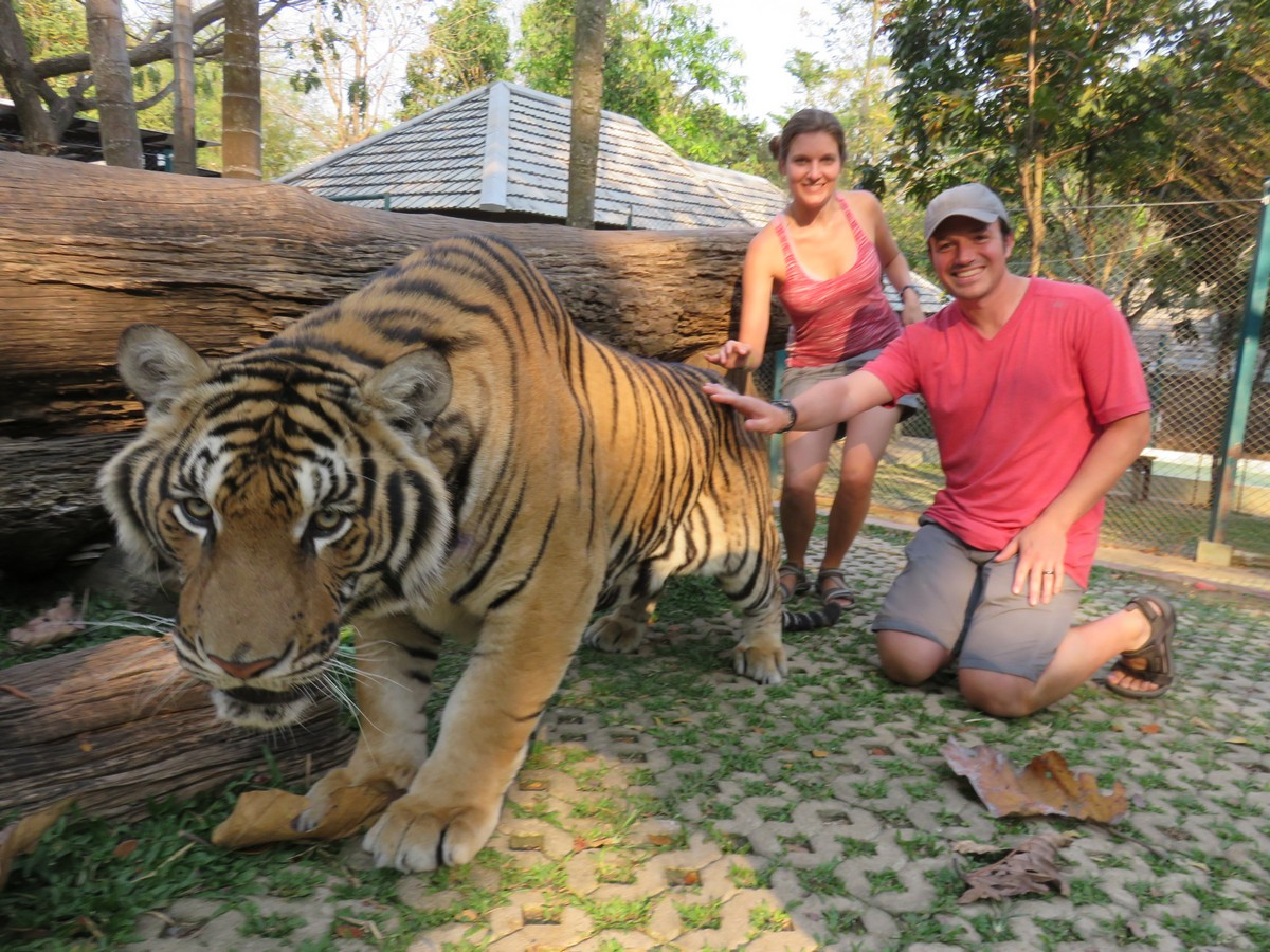 When the tiger wants to move the tiger gets to move.