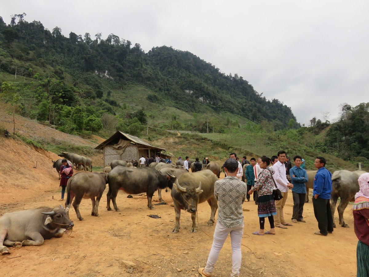 This is what a water buffalo market looks like