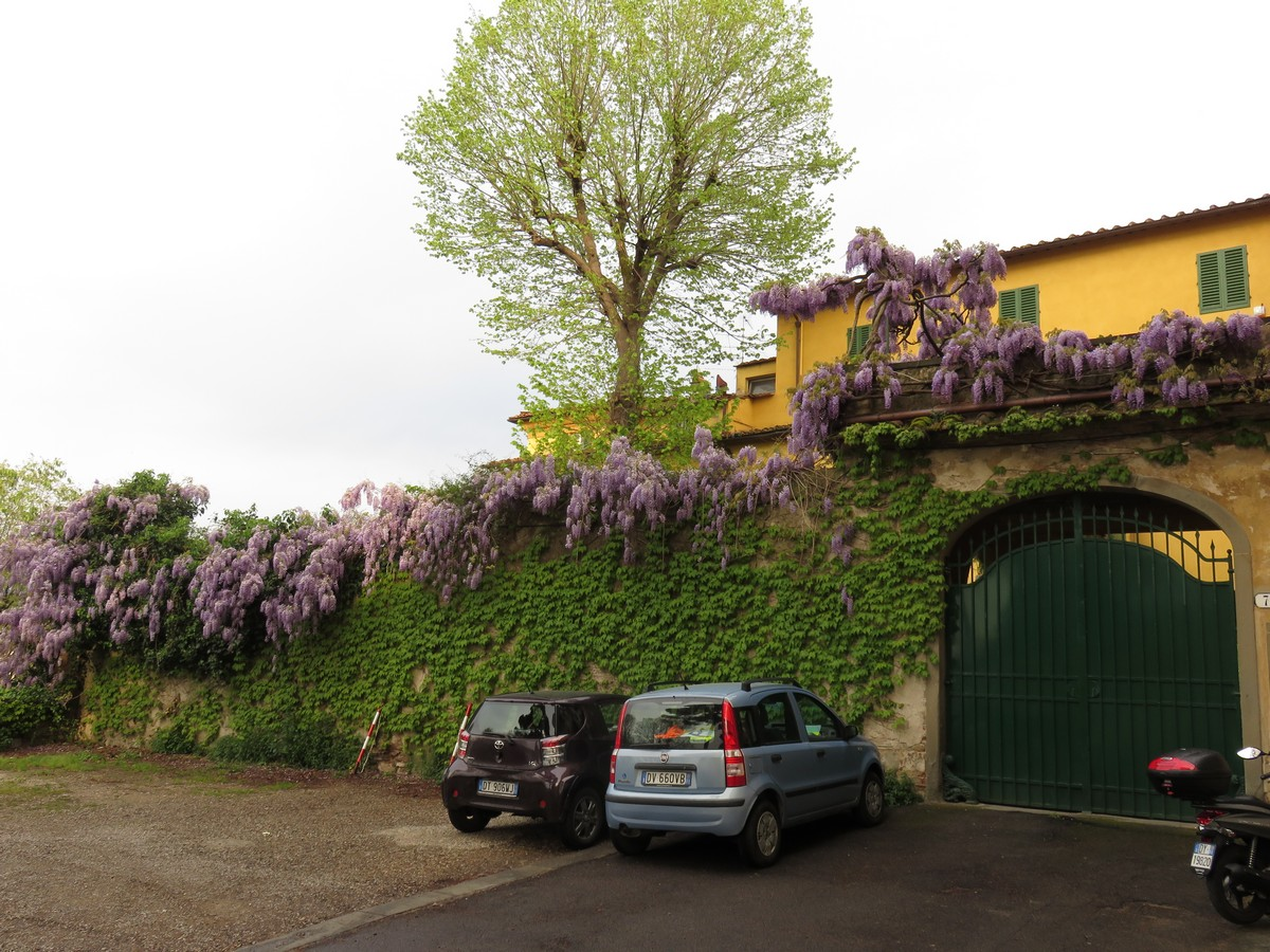The wisteria kept on blooming!