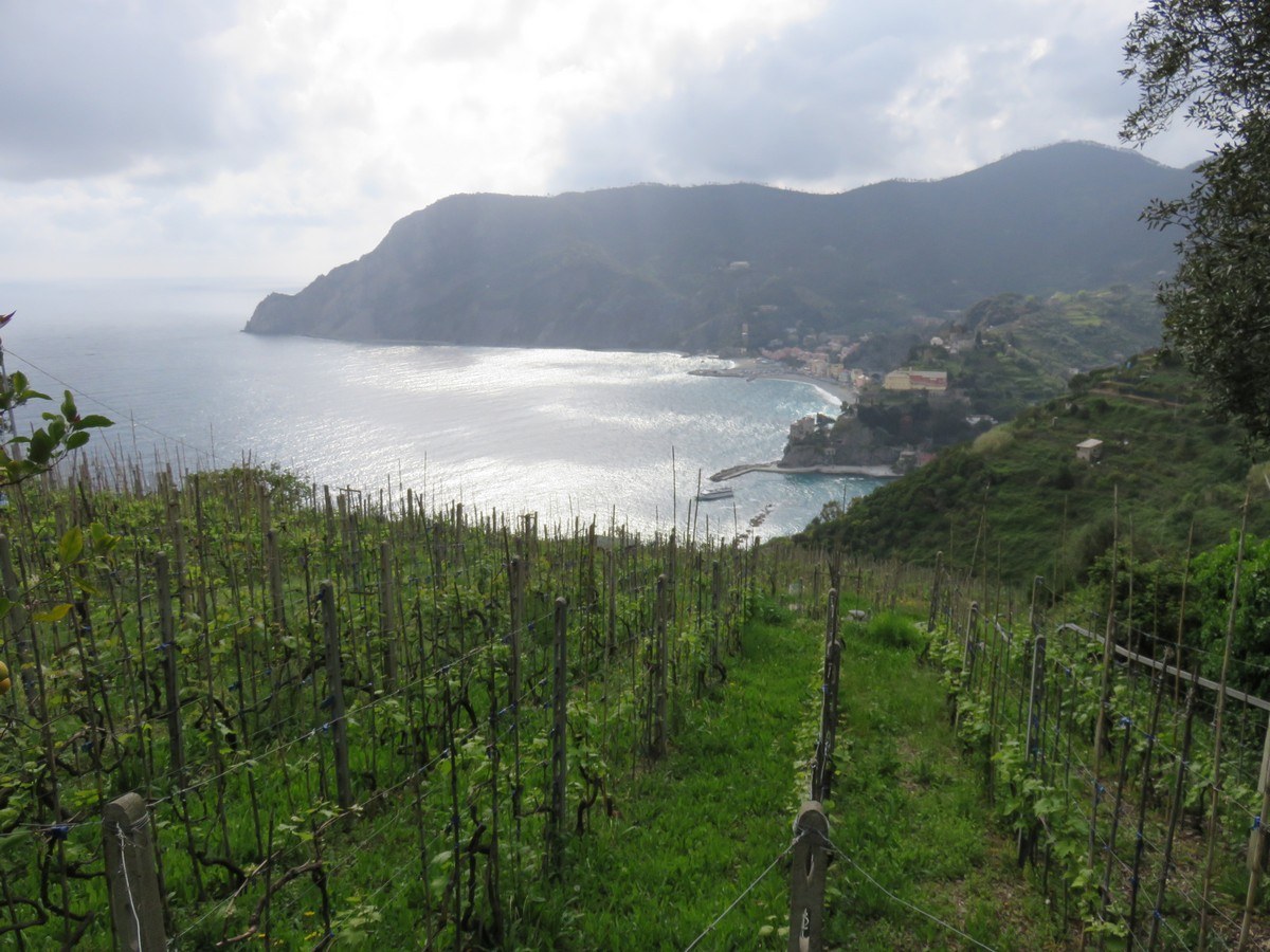 Vineyards and lemon groves over sparkling waters