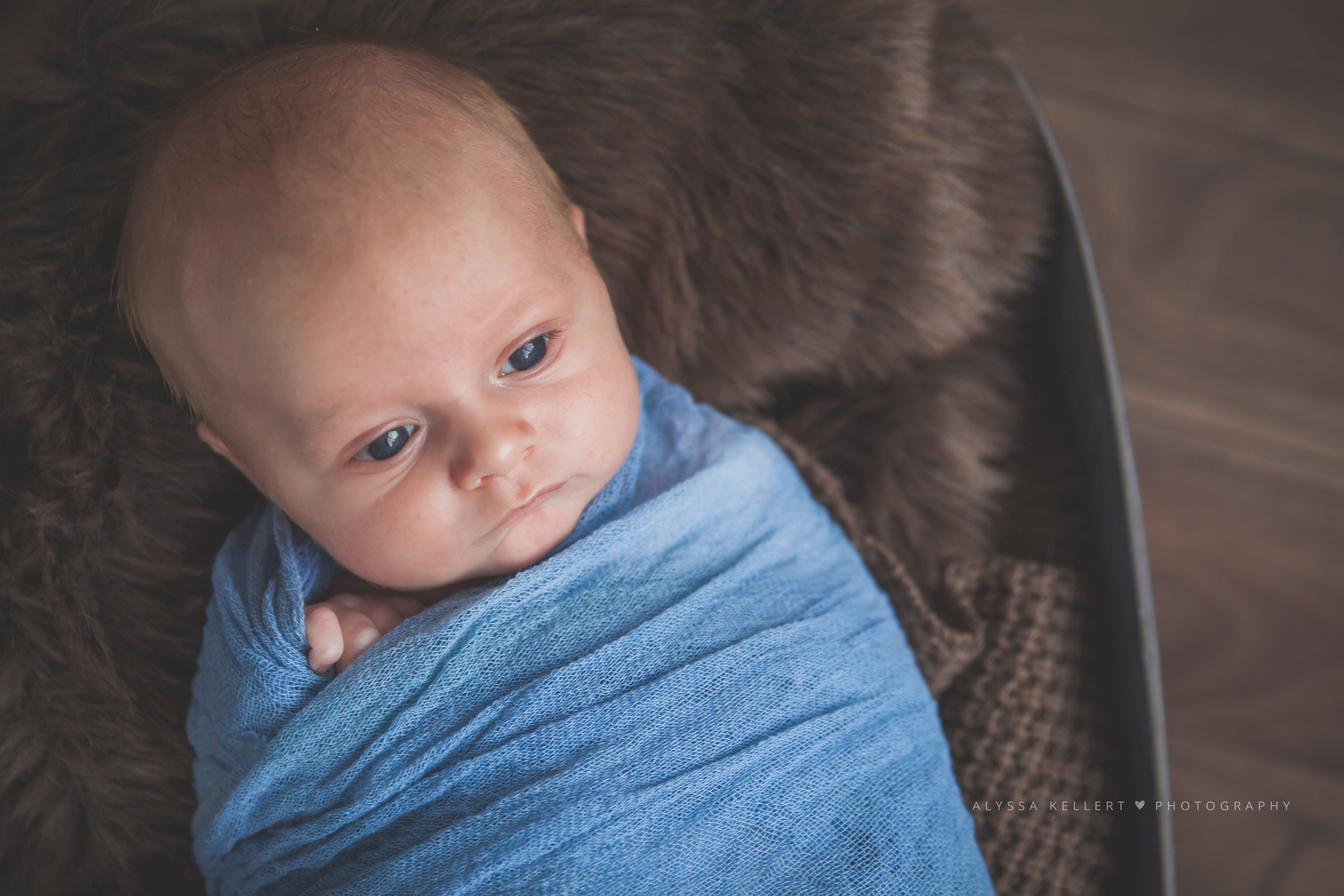6-week-photography-baby-newborn-boy-abbotsford-gorgeous-natural-light-basket-blue