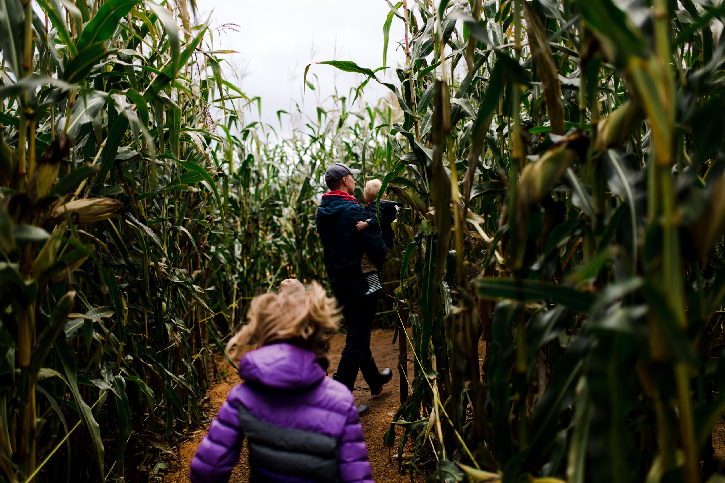 girl chasing after her dad and baby brother in corn maze