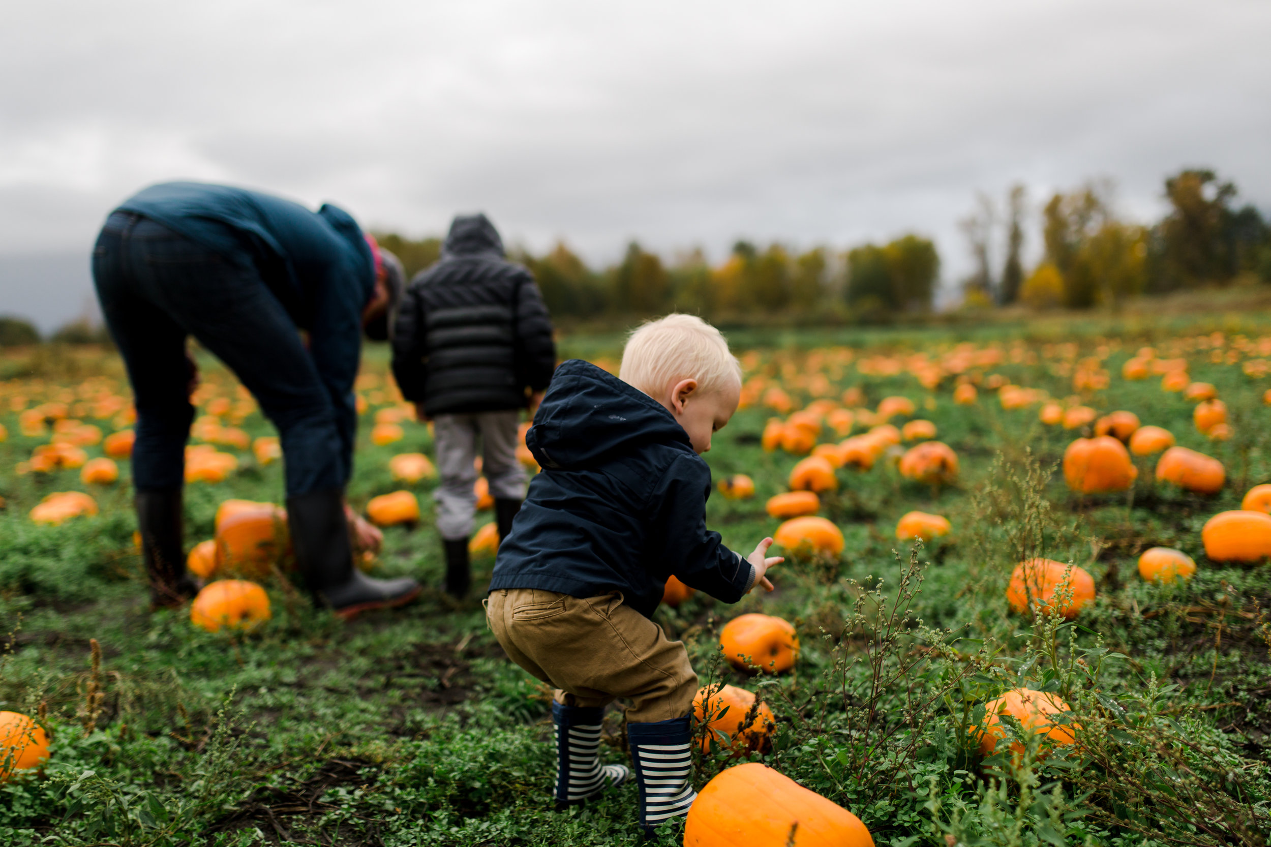 toddler with dirty hands in laity pumpkin patch in maple ridge