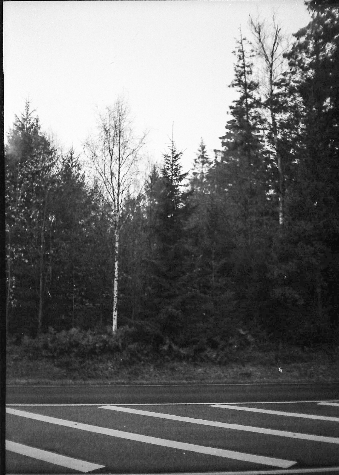 norfilm-6.jpg