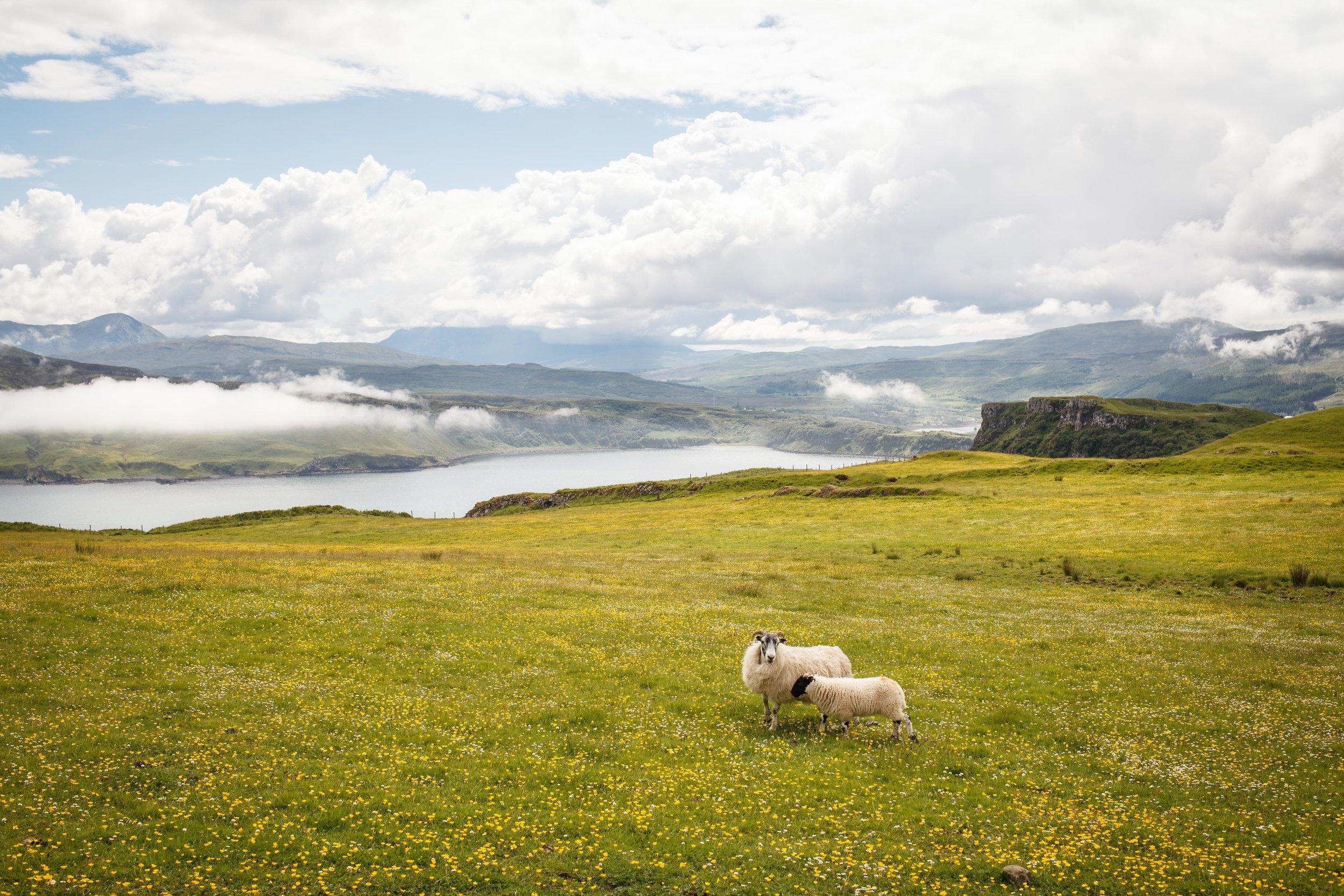 scotland (151 of 537).jpg