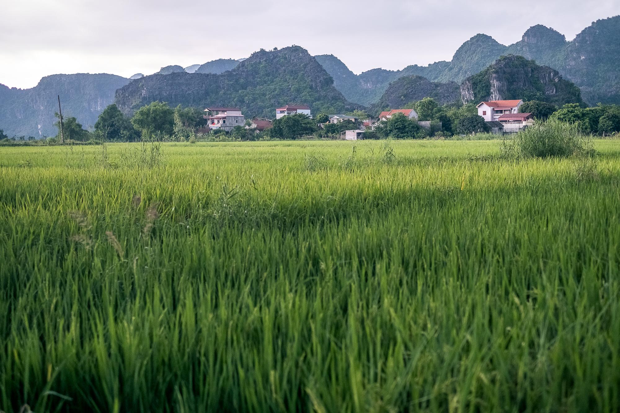 Vietnam_Honeymoon_TheOutsiderBlog_DSCF8765.JPG