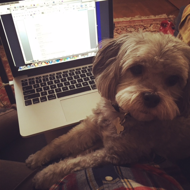 a more and more familiar scene these days: me editing, him wanting my lap back