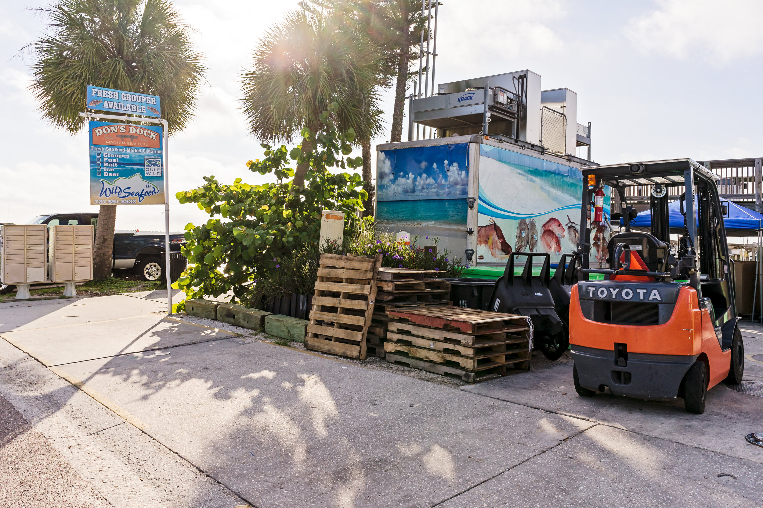 Wild Seafood is in St. John's Village and located at Don's Dock. It is a family owned fish house that provides sustainable seafood harvested in the Gulf of Mexico. They provide seafood to both commercial and local consumers.