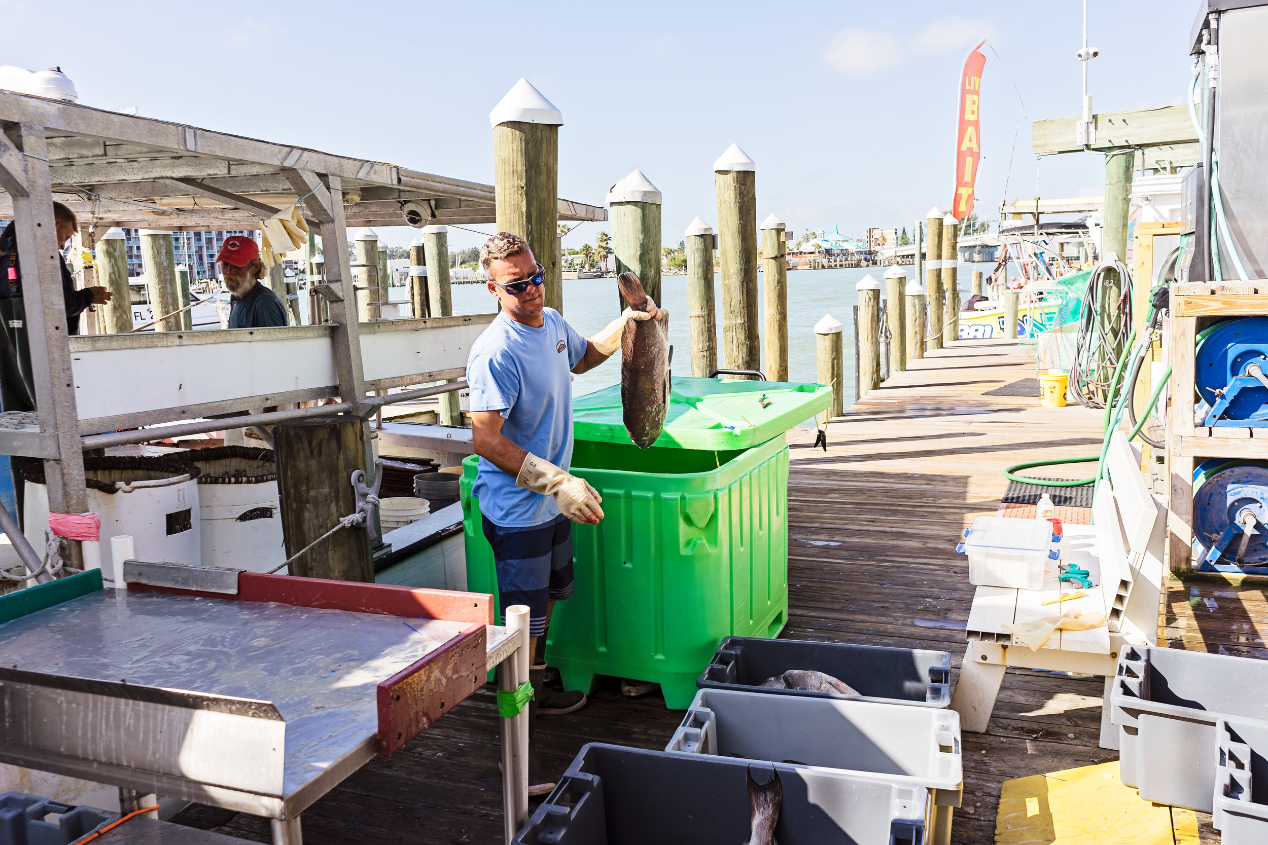 Chris Zook moving fish from the large container to a smaller bin.