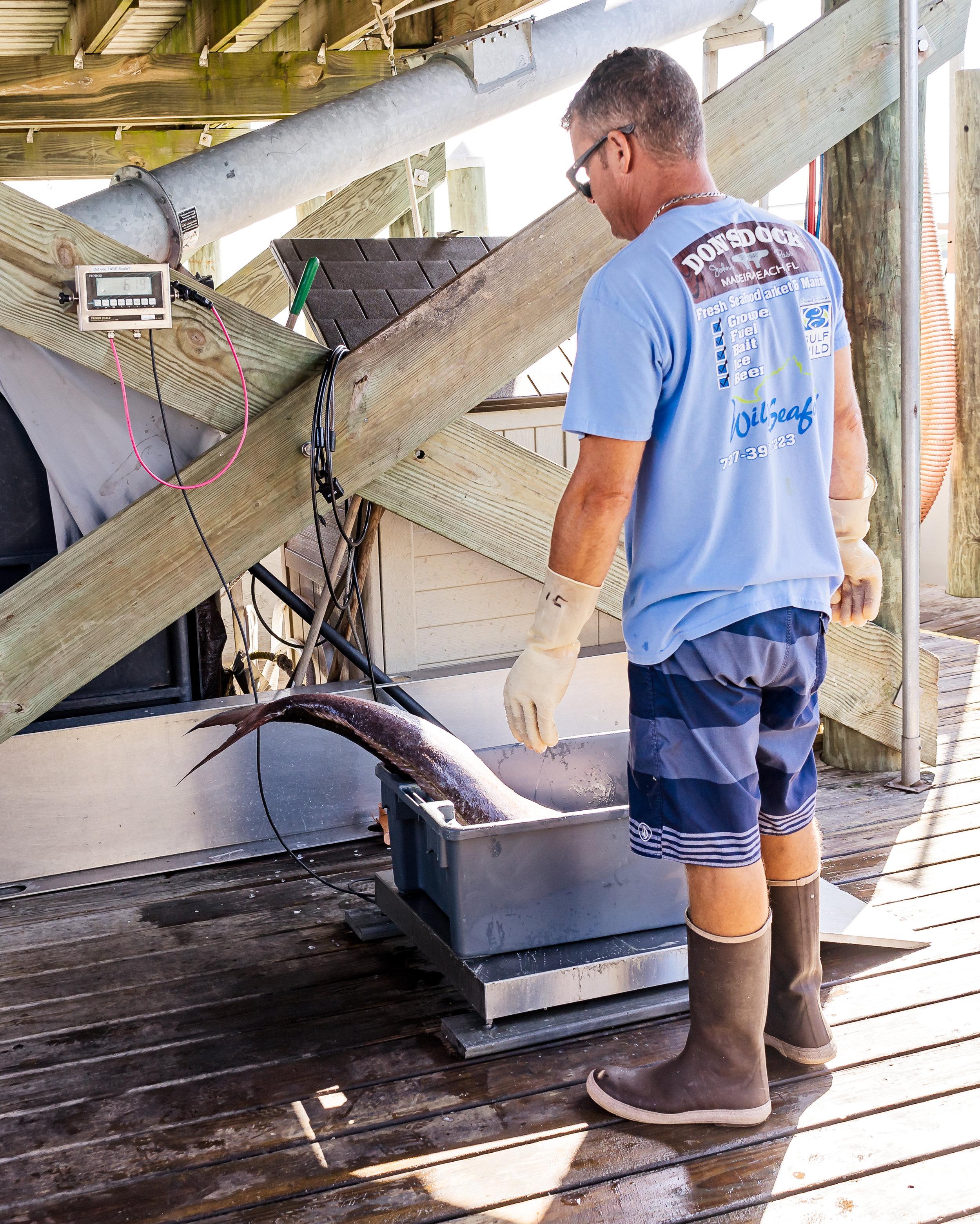 Chris Zook weighing a bin of fish.