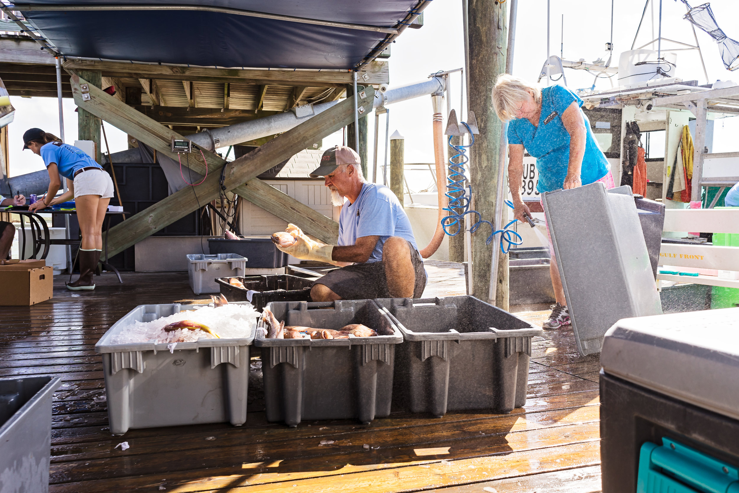 Rick Swagger sorting fish into bins while Toni Romero hoses out empty ones.