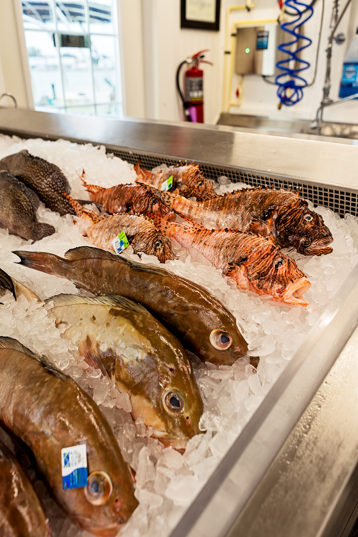 A selection of the seafood offered at the local fish market, Wild Seafood.