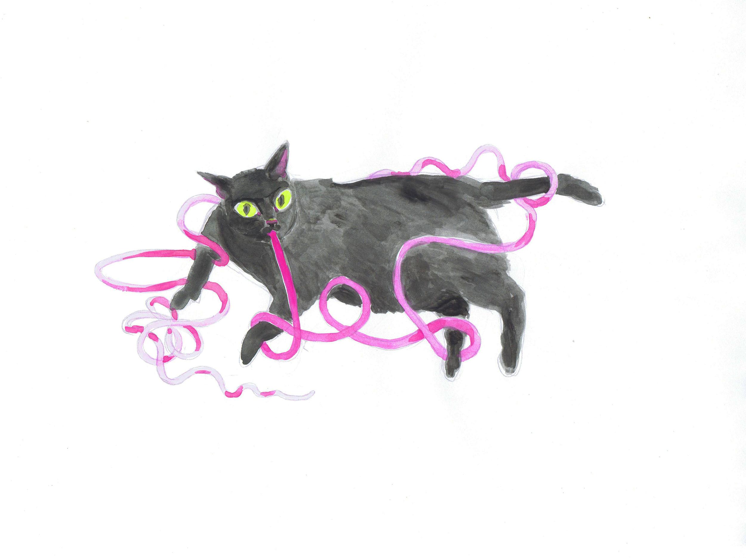 Cat Got Your