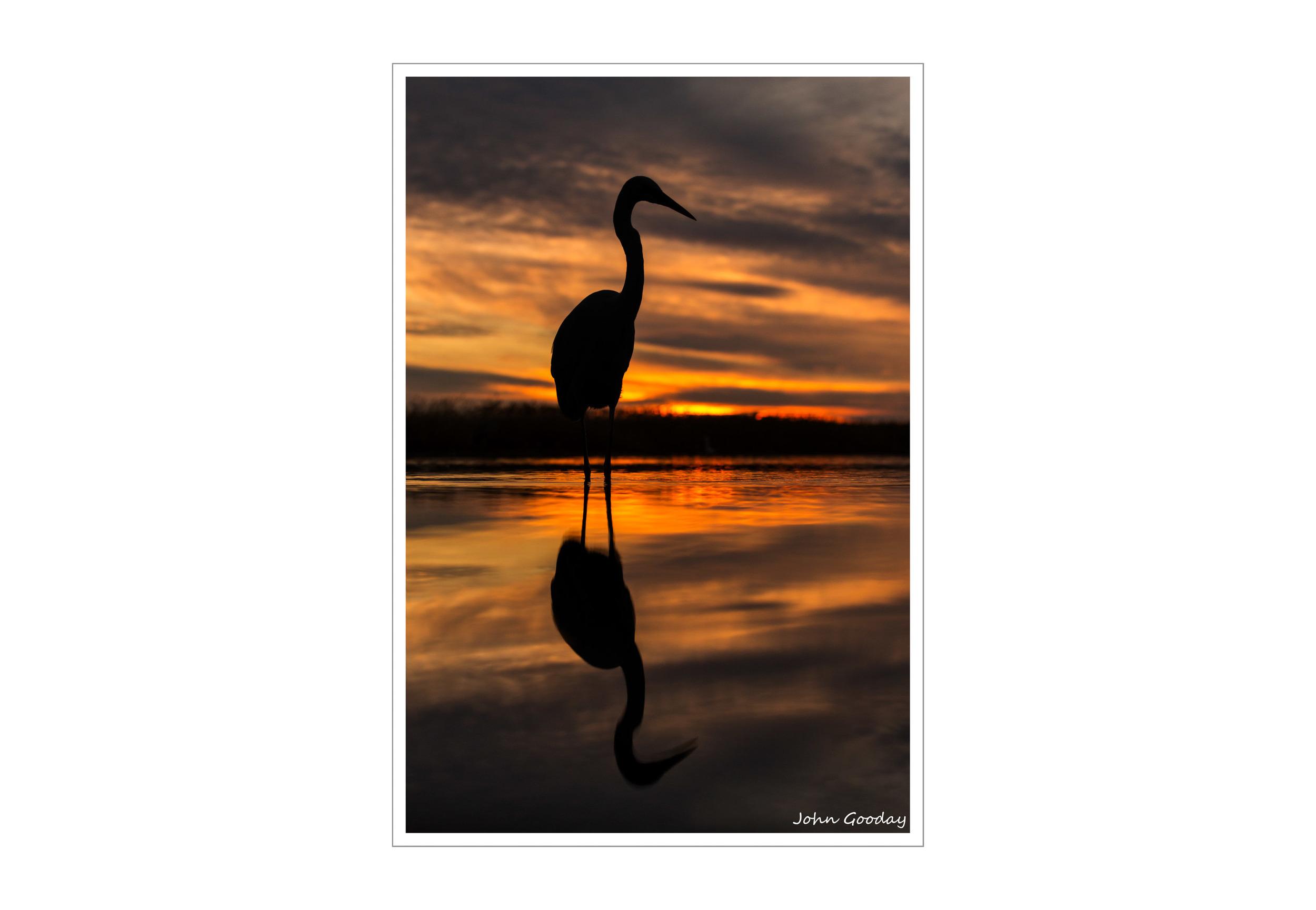 Image: Great Egret' Kiskunsagi National Park, Hungary.    Canon EOS 5D Mark III, EF70-200mm f/2.8L IS II, 1/400 sec @ f/4.5, ISO 800, tripod, hide.
