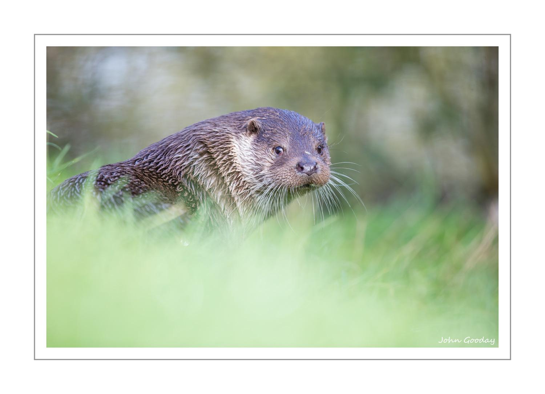otter WEBFRAME _70R8985-2  Website.jpg