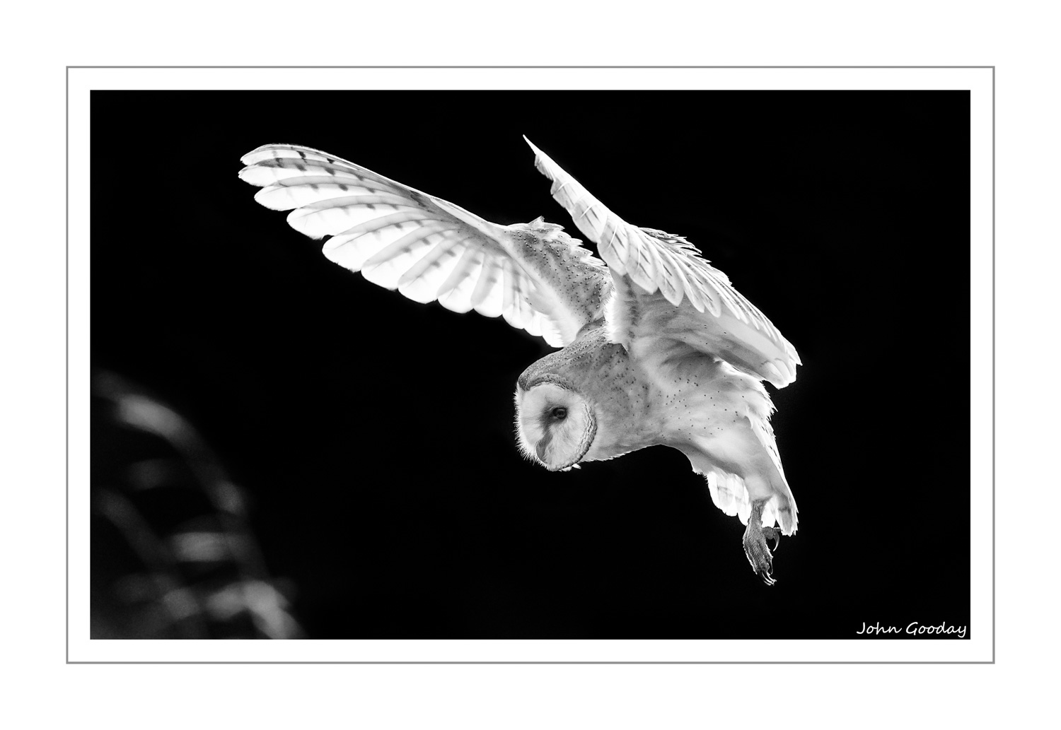 (Image: Barn Owl coming in to land, Czech republic. Canon EOS 1DX, EF500mm f/4L IS II, 1/2000 sec @ f/7.1. ISO 3200)