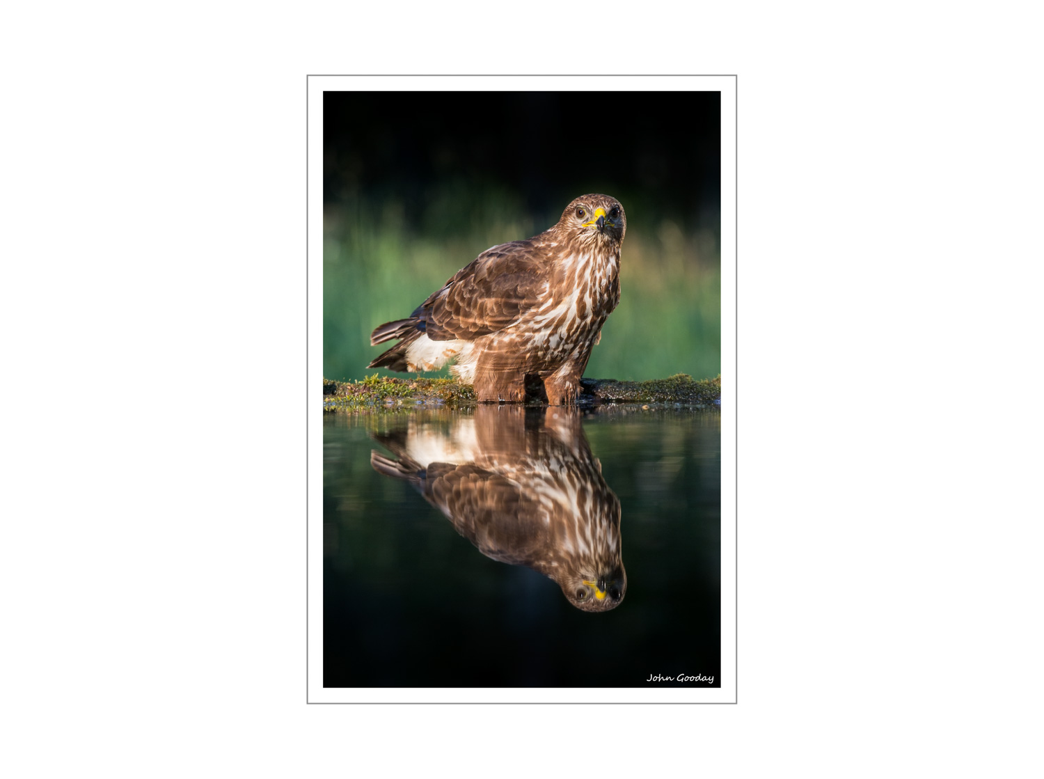 (Image: Common Buzzard. Canon EOS 5D Mark III, EF 70-200mm f/2.8L IS II, 1/200 sec @ f/4.5, ISO 1250, tripod, hide).