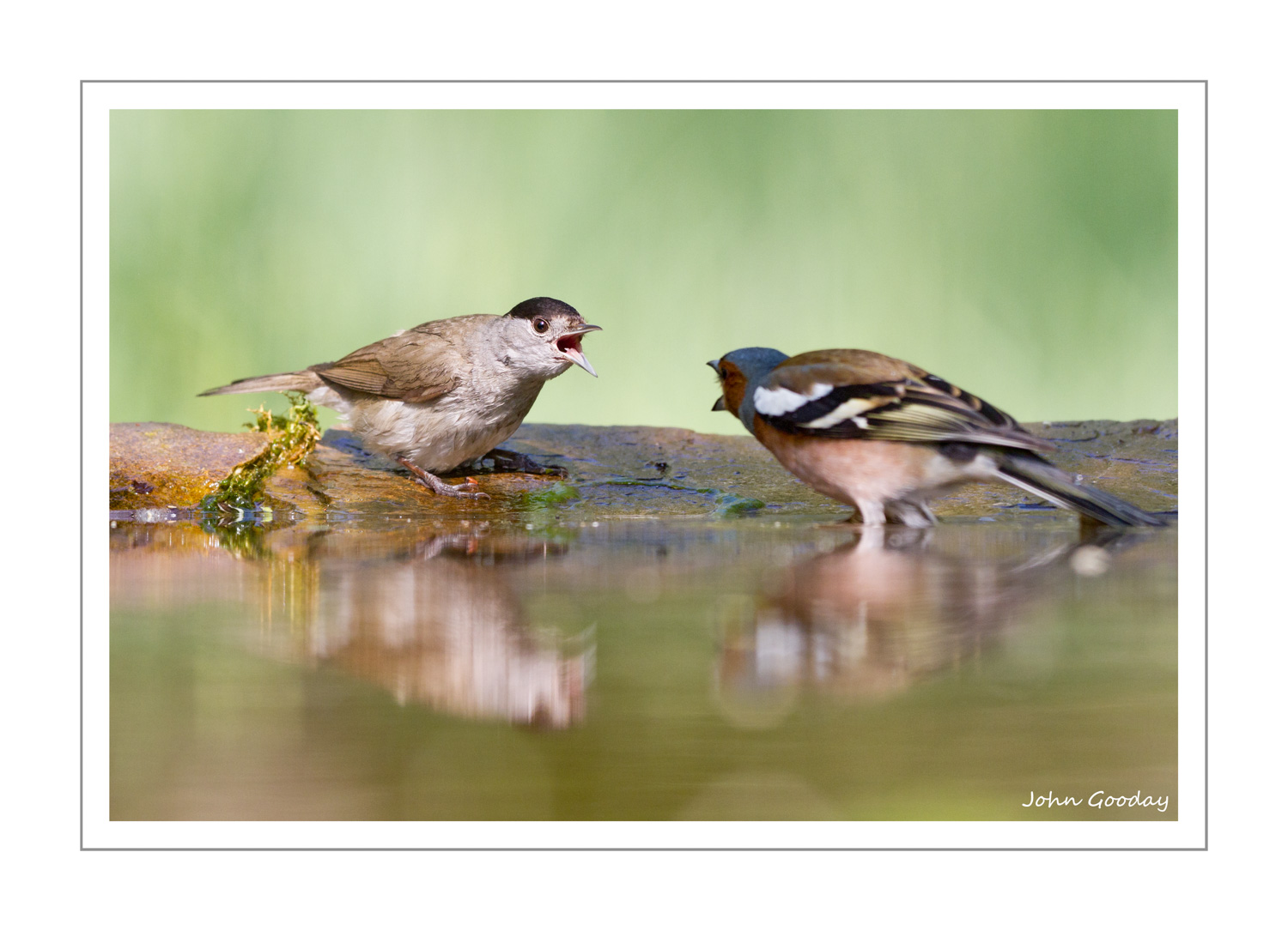 (Image: Blackcap challenging a Common Chaffinch. Canon EOS 7D, EF300mm f/2.8L IS, 1/400 sec @ f/4.5, ISO 640, tripod, hide)
