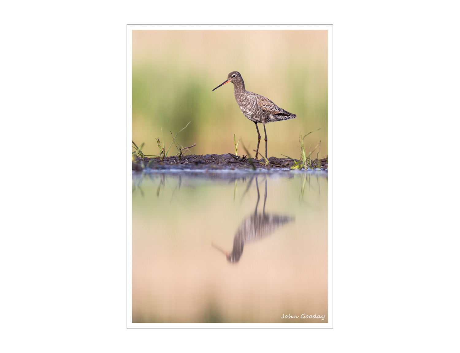 (Image: black-tailed Godwit. Canon EOS 5D Mark III, EF300mm f/2.8L IS + 1.4x II, 1/500 sec @ f/5, ISO 1600)