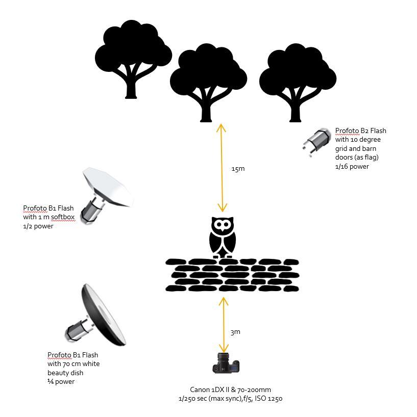 barn owl take-off lighting diagram.JPG