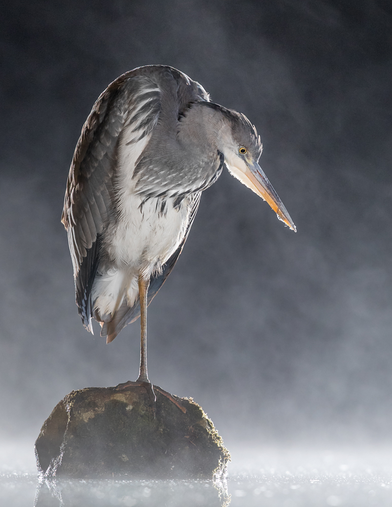 heron noise reduction_A8I8216.jpg