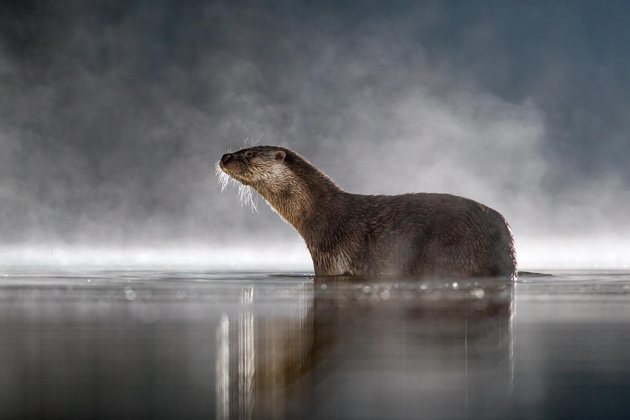 otter noise reduction _A8I8329.jpg