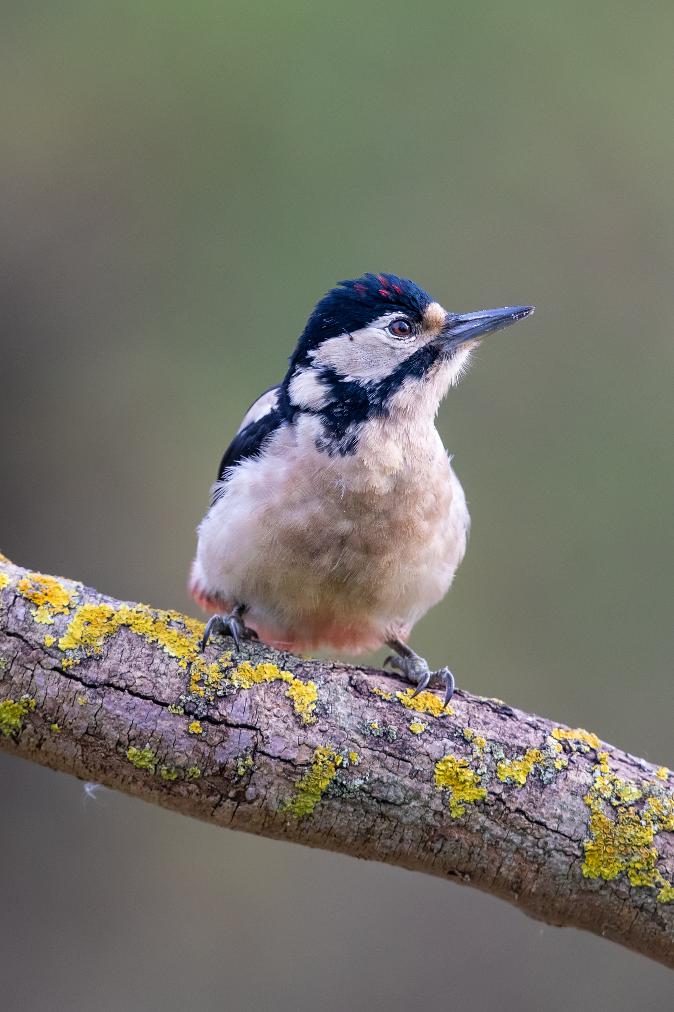wodpecker noise reduction_A8I2619.jpg
