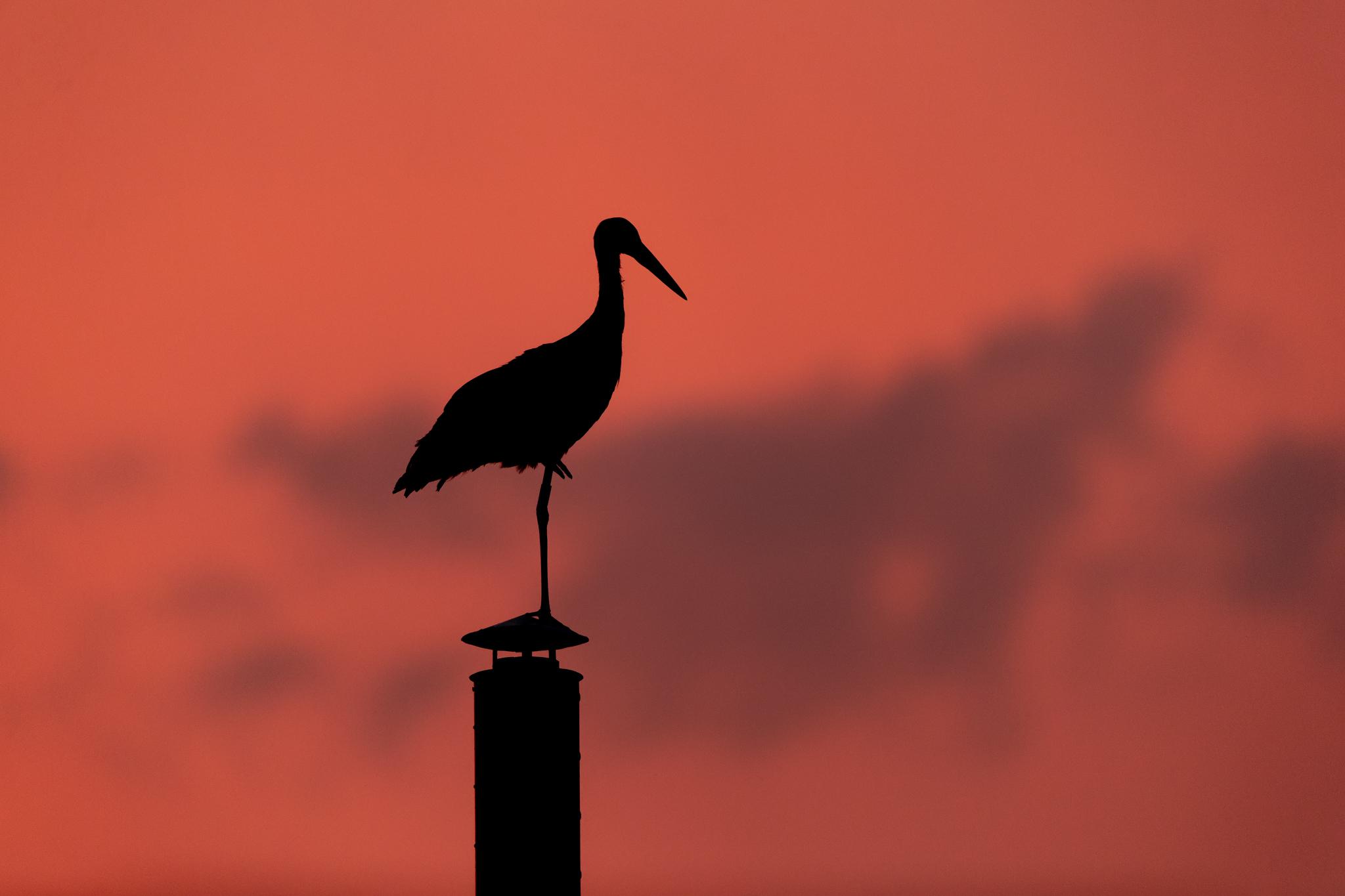 stork silhouette noise reduction _A8I1143.jpg