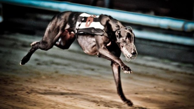 greyhound at night.jpg