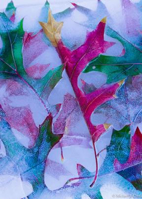 Autumn Oak Leaves.jpg