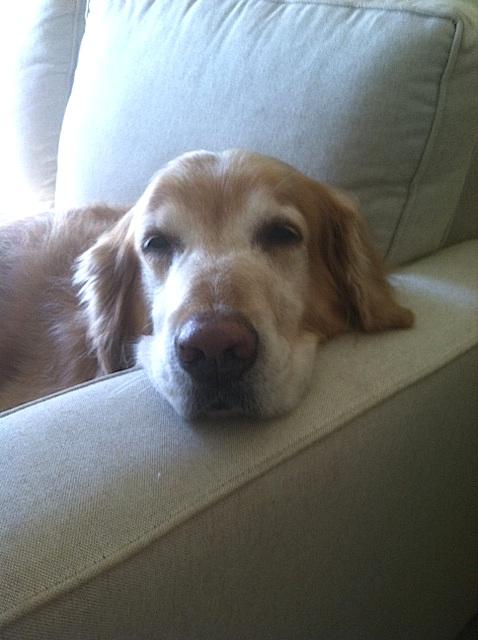 Corona - my main man, friend, confidant & all-around buddy. (Cindy Sue)