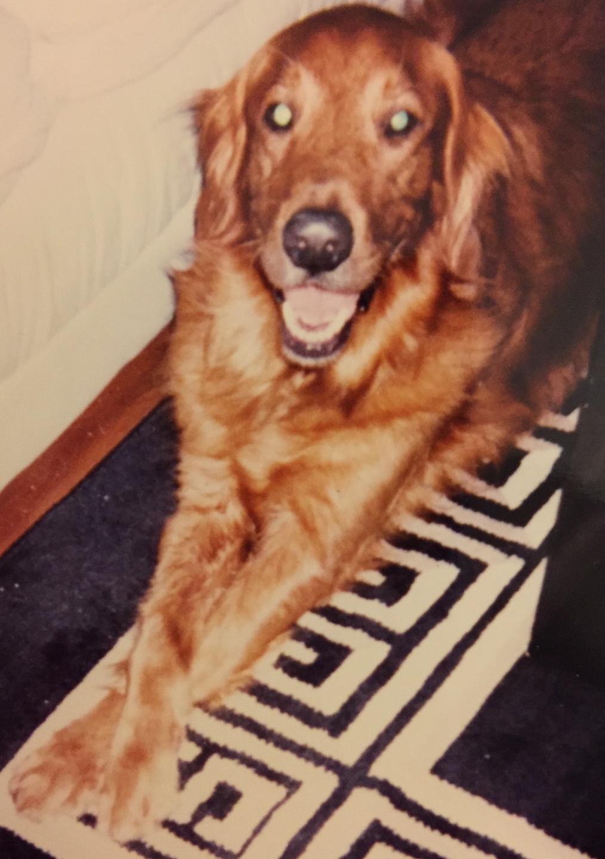 Zack - The First GRRNT Golden - 1996