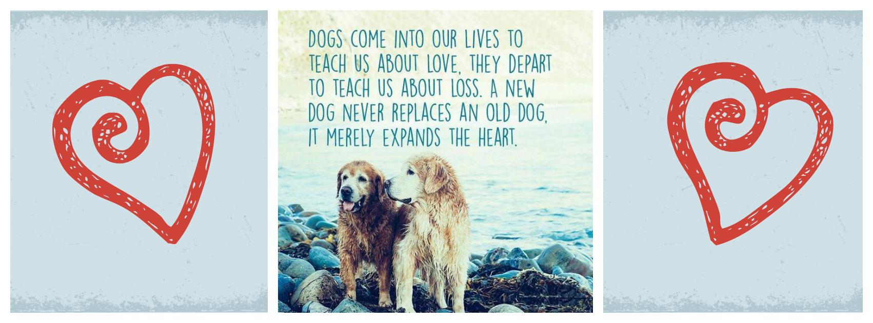 dog hearts.jpg