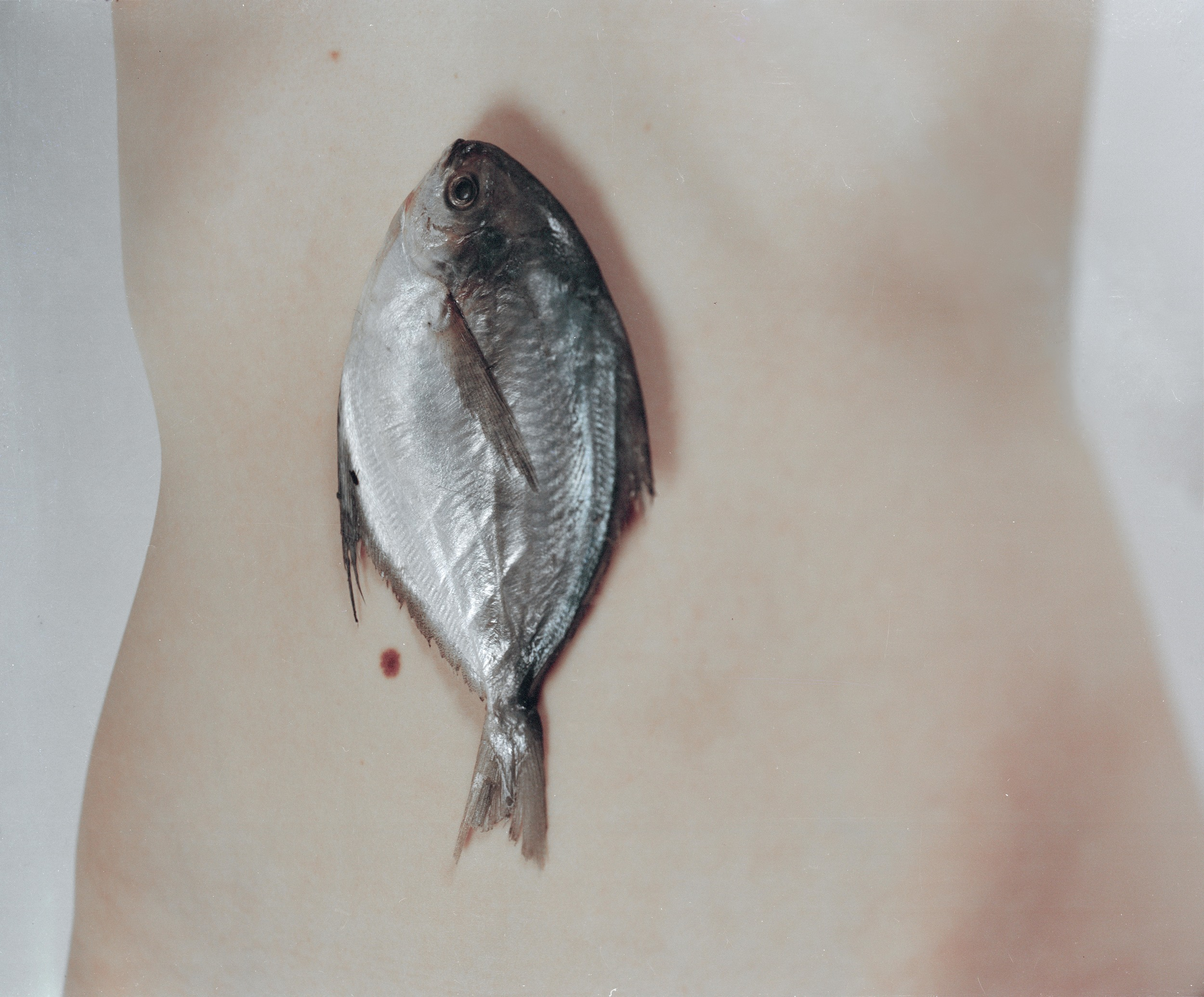fish-for-web2-.jpg